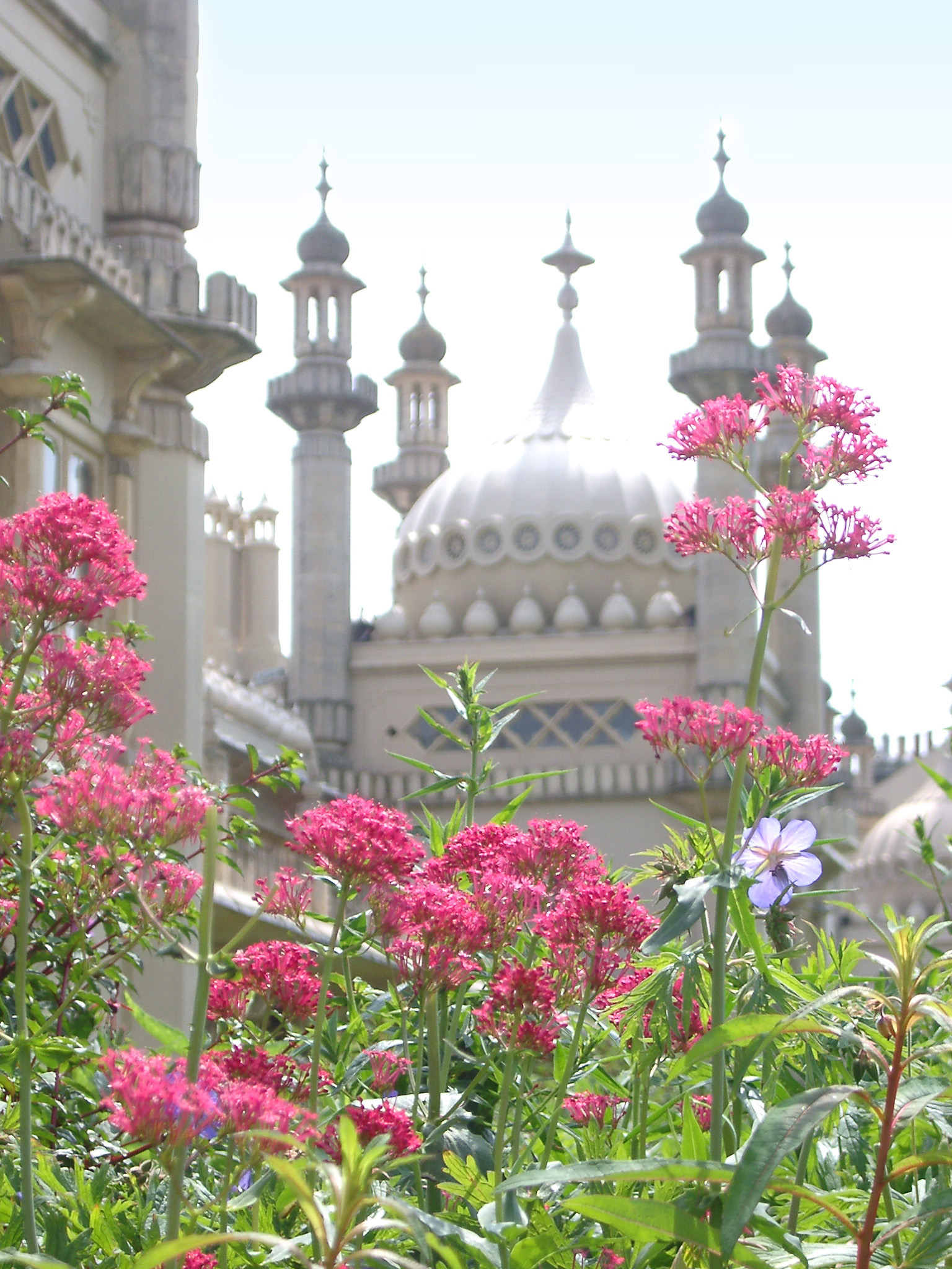 Attractive Fresh Red Flowers at the Back Garden of Famous Royal Pavilion Building, Located at Brighton, England.