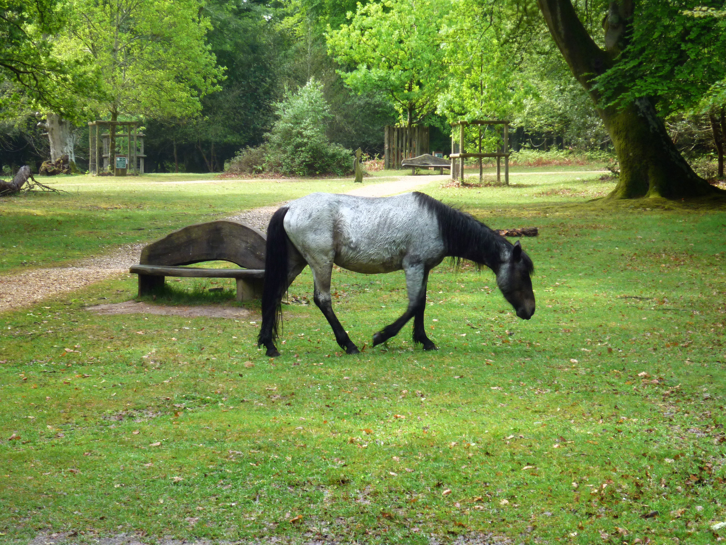 a wild pony roaming the new forest national park lands