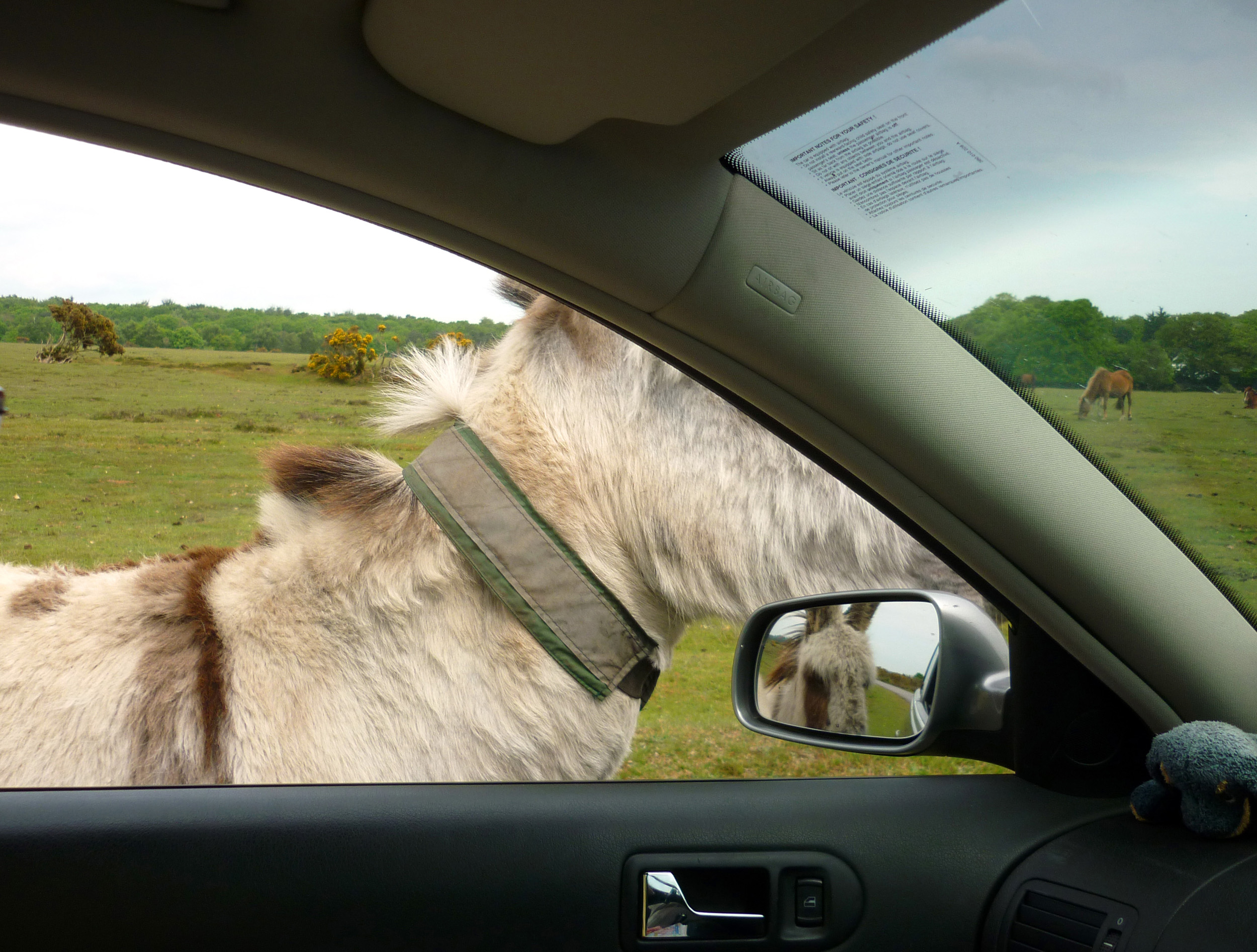 horse viewed through a car window and in the mirror, new forest, dorset