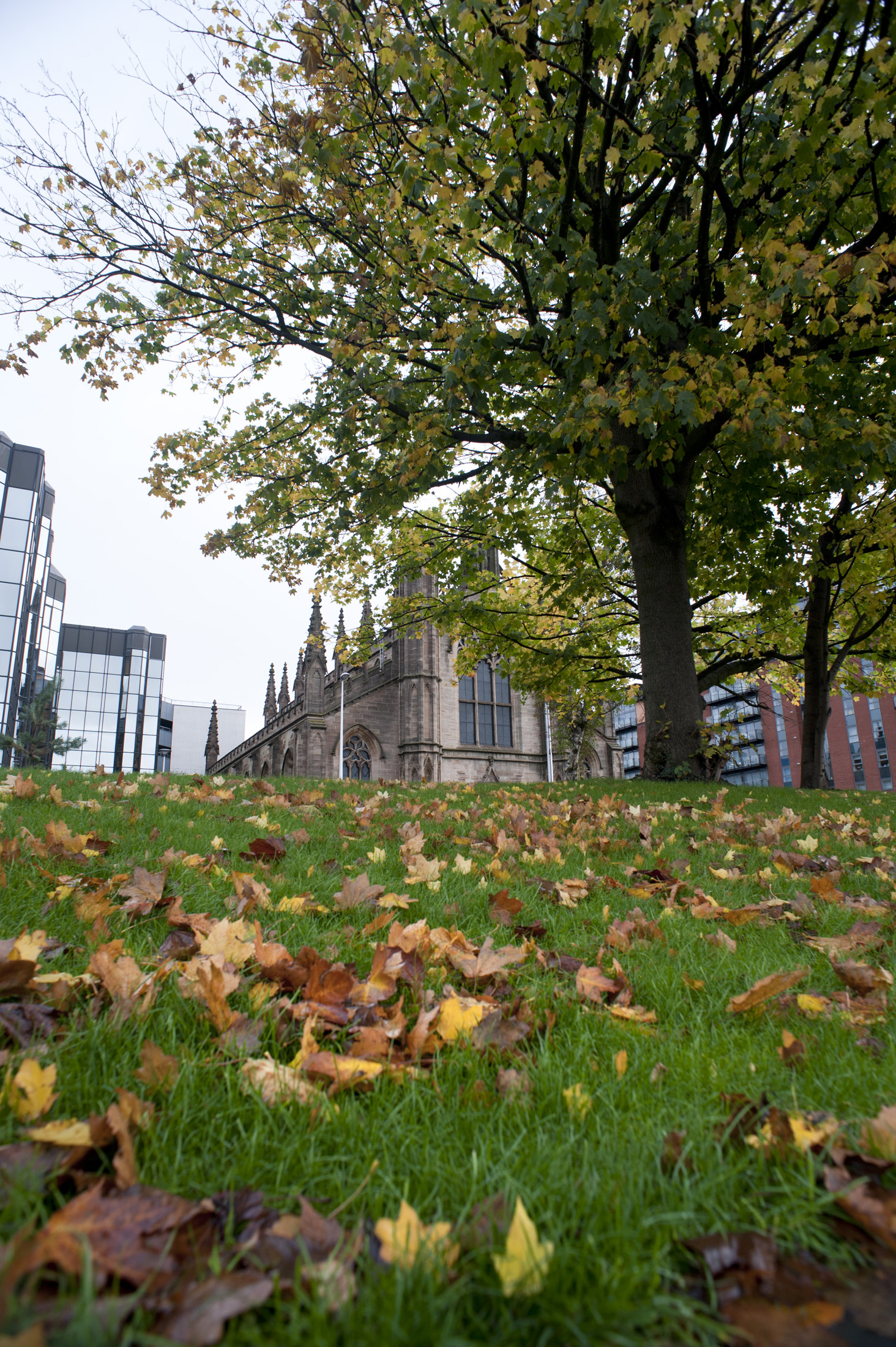 View across a green lawn scattered with autumn leaves of St Andrews Cathedral in Glasgow on the skyline