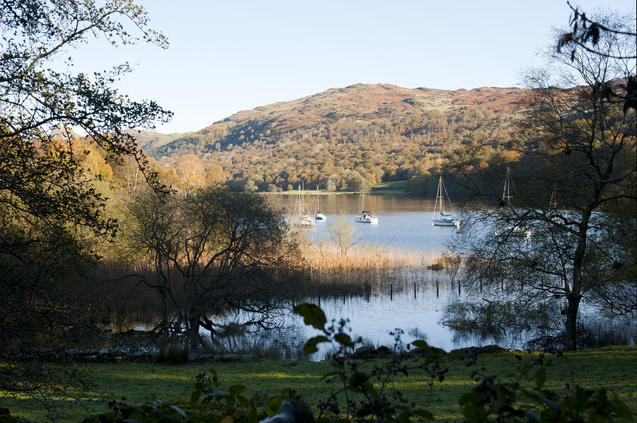 Scenic view through foliage of yachts moored in Coniston Water in Cumbria, the third largest lake in the Lake District