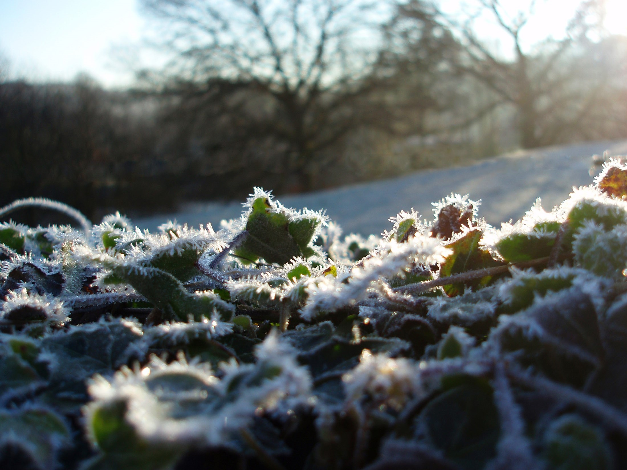 a frosty winter morning with sun glinting on ice crystals in the countryside