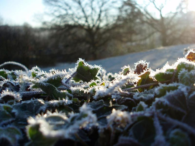 Free Stock Photo Of Winter Frosts Photoeverywhere