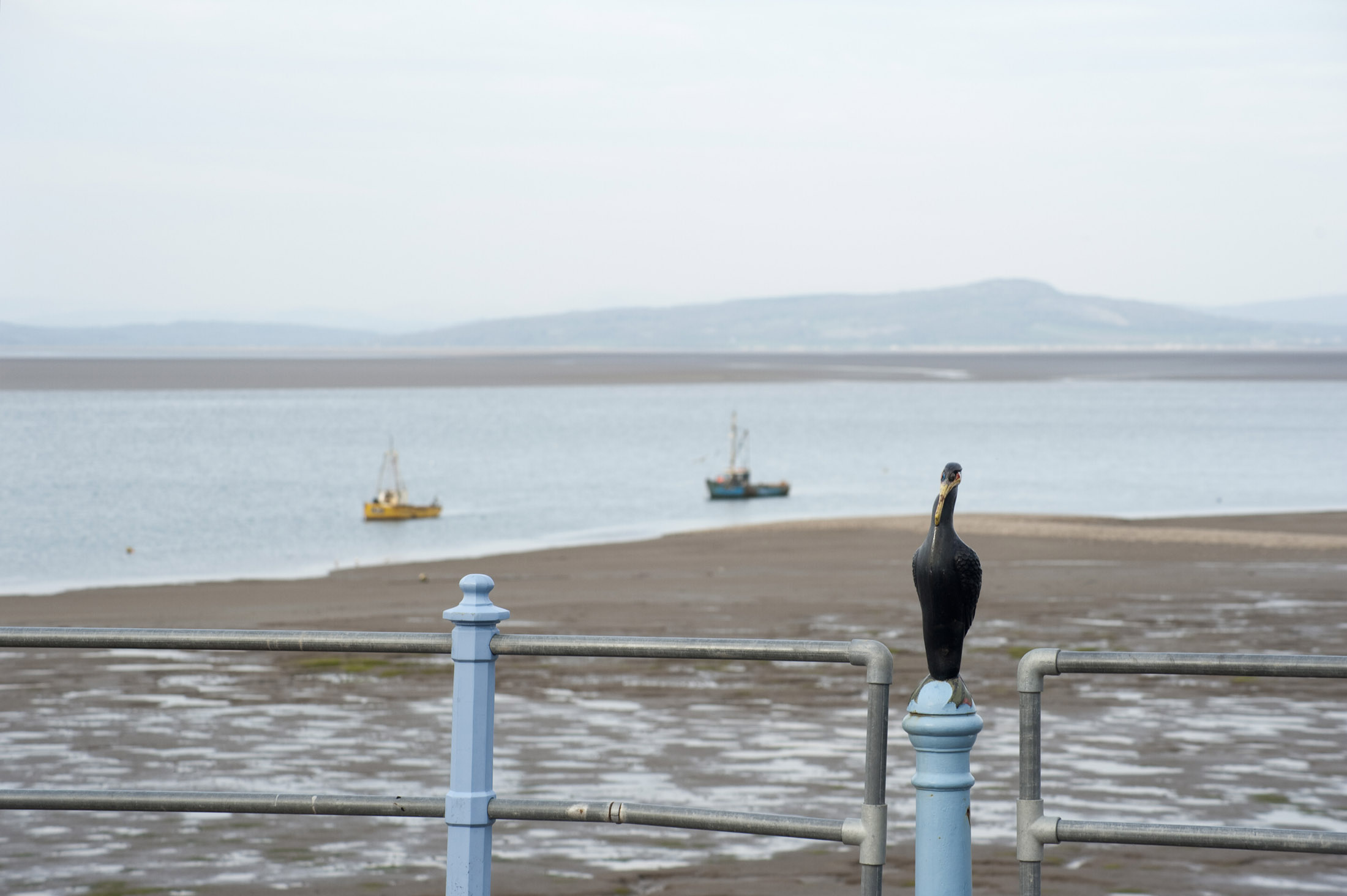 a metal cormorant sculpture sits on top of the railings on morecambes stone pier
