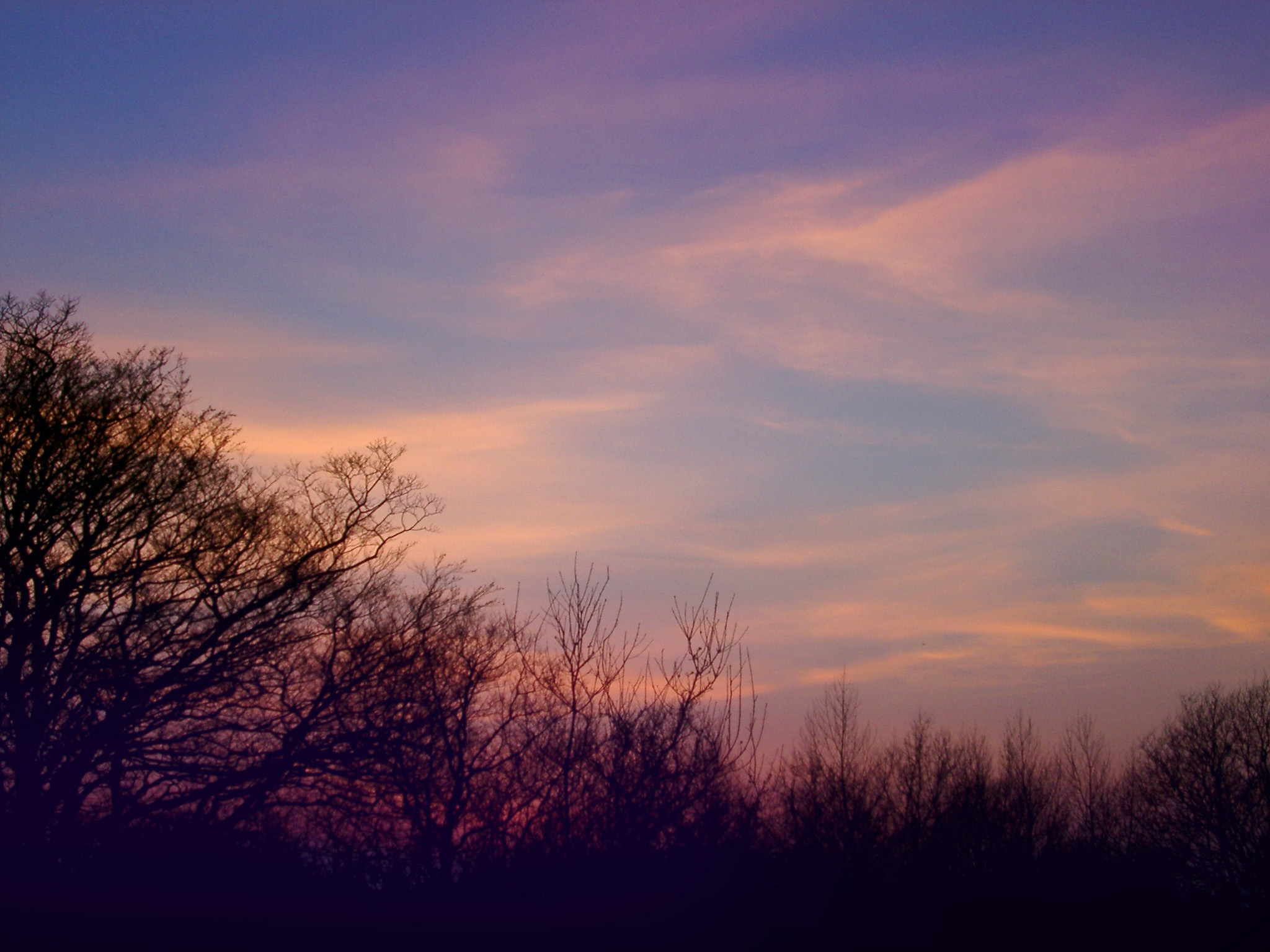 Conceptual Tranquil View of Silhouette Leafless Trees and Sky During Sunset Time.