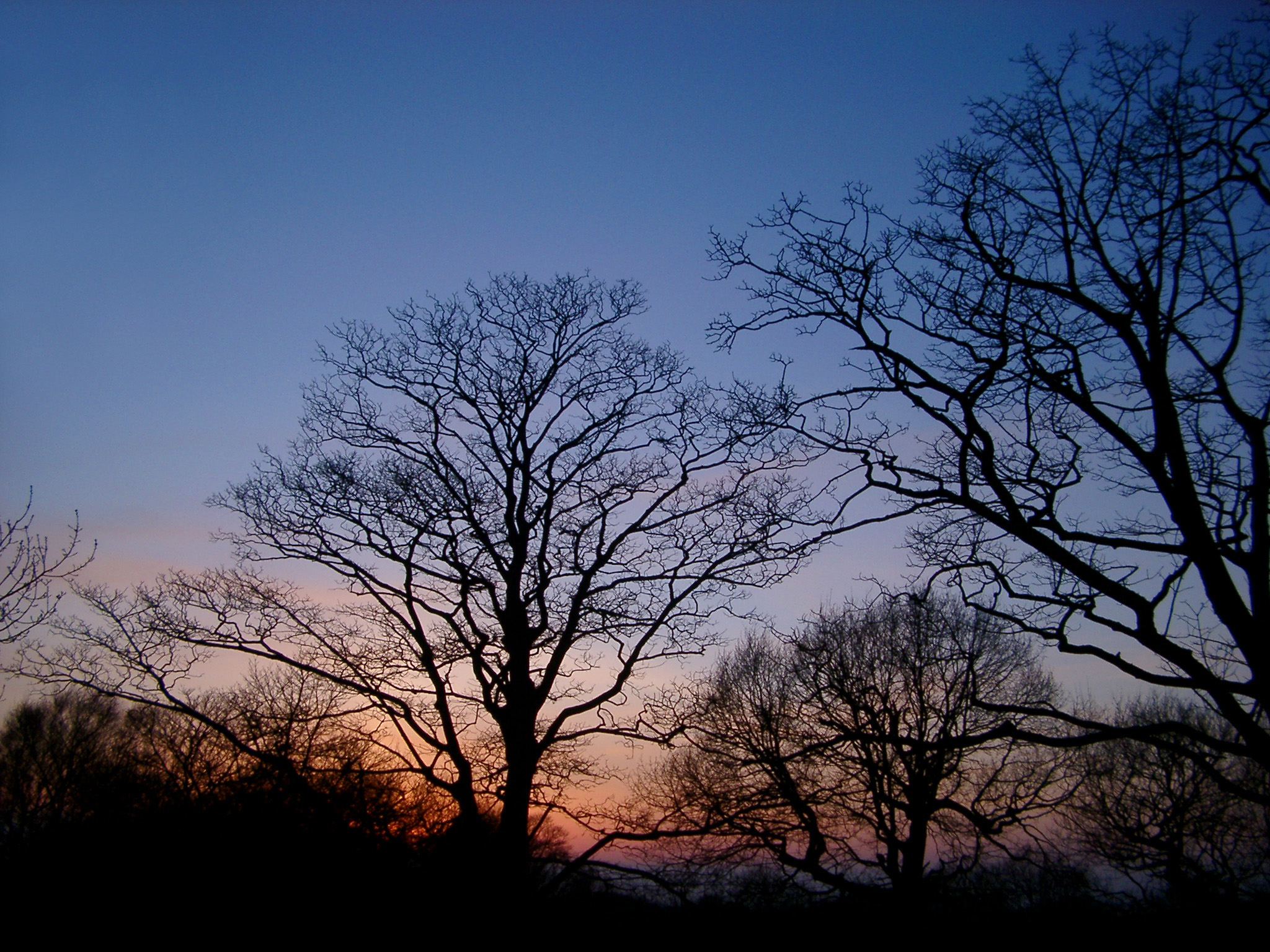 Serene scenic landscape with silhouettes of bare deciduous trees against the sky, at twilight