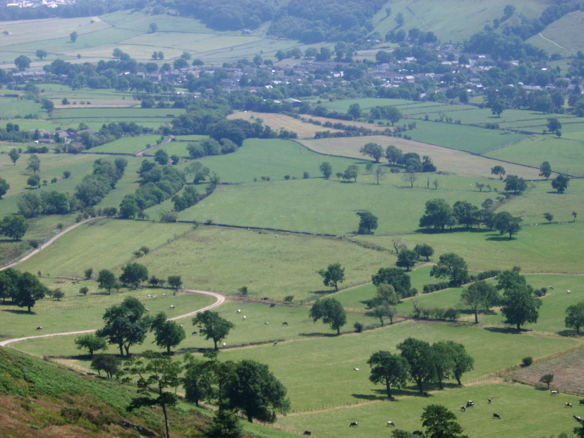 Derbyshire Dales landscape with rural fields and farmland dotted with trees in the lush English countryside