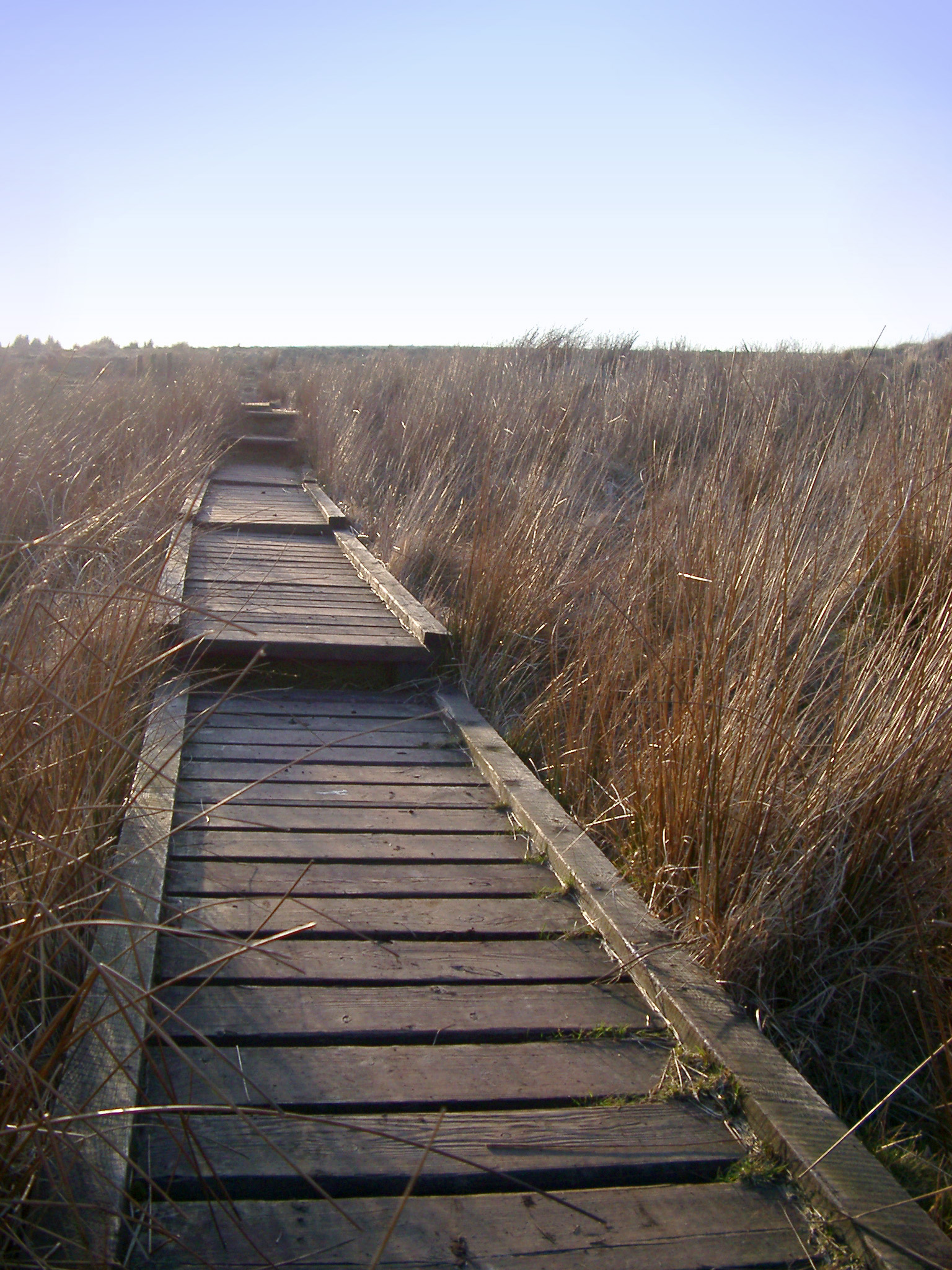 Walkway with Tall Brown Grasses on the Sides at Winter Hill in England. Captured with Lighter Blue Sky Background.