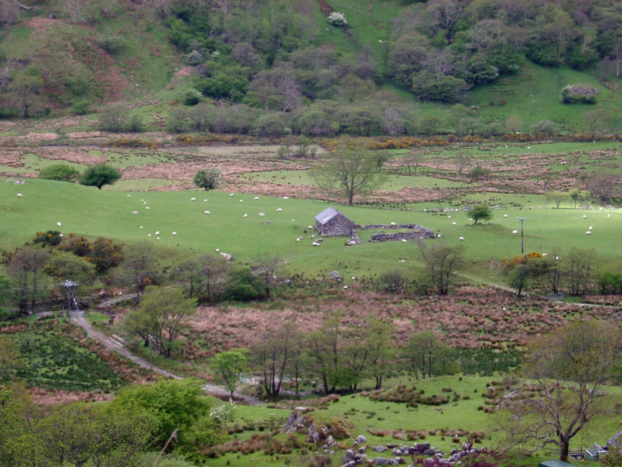 Panorama Aerial View of Farm House on Grassland with Various Animals and Green Trees.