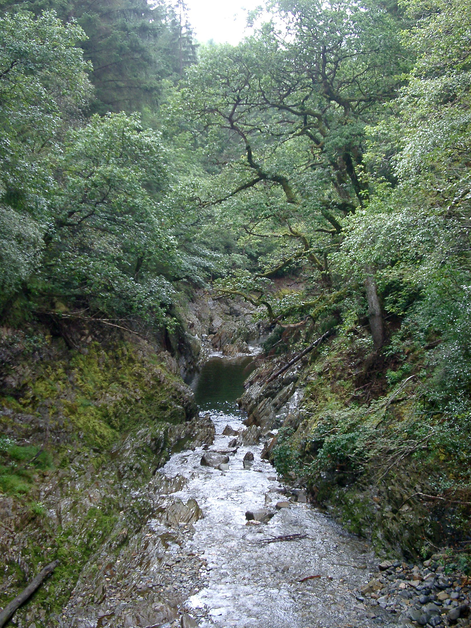 River flowing with melt water in a leafy green woodland landscape with overhanging trees in Wales