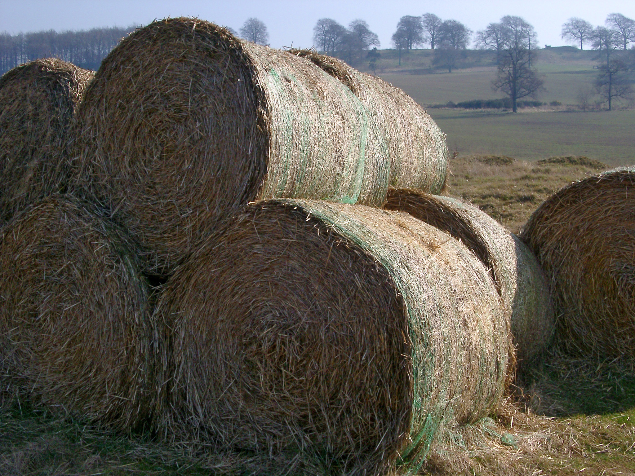 Round hay bales for winter livestock feed stacked in an agricultural field in the sunshine