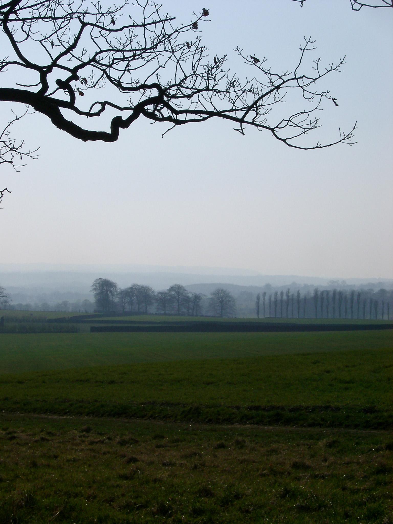 Wide Field with Fresh Green Grasses on One Foggy Day. Captured with Leafless Dead Tree.