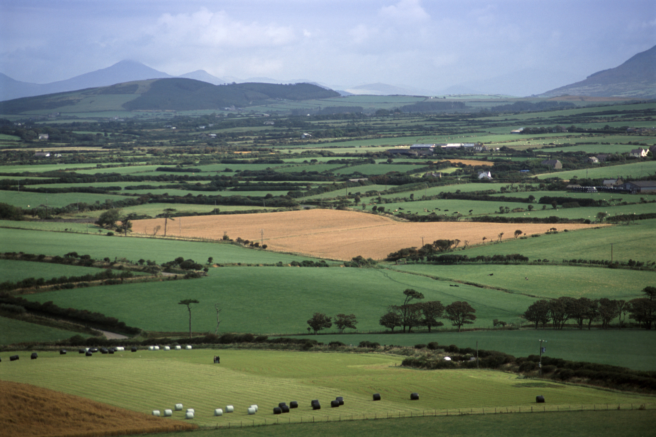 Patchwork of lush green Welsh fields and pastures with grazing livestock on the Llyn Peninsula bordering the Irish Sea