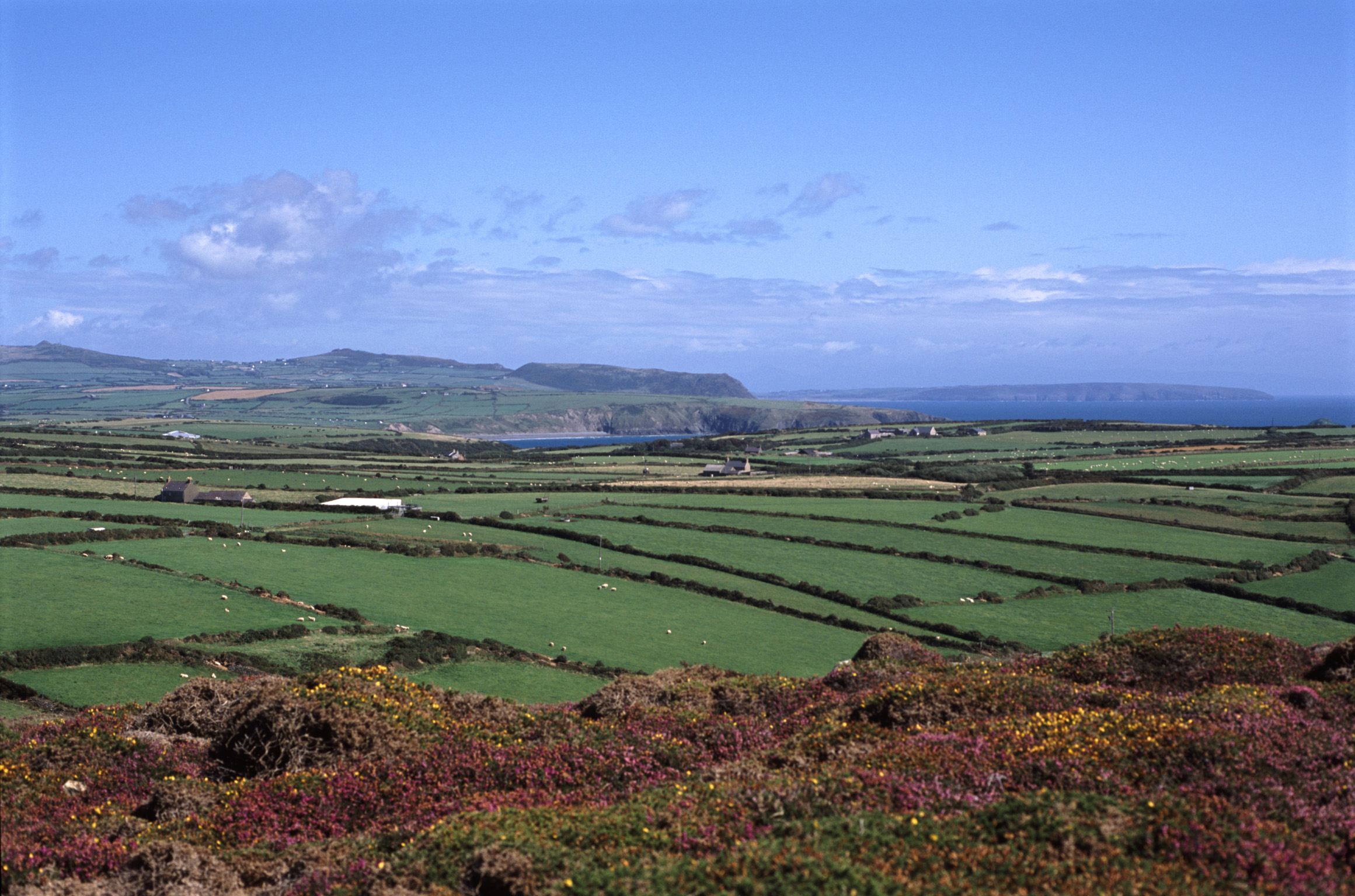 Scenic agricultural landscape with a patchwork of lush green corn fields on the Llyn peninsula overlooking the Irish Sea