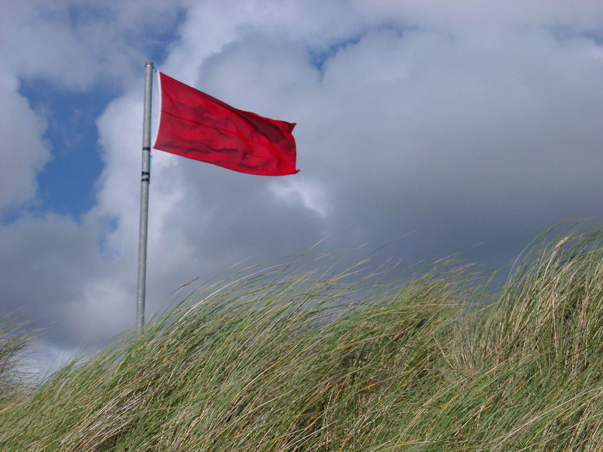 Looking Up at Red No Swimming Warning Flag on Windy Grassy Dune with Dark Clouds