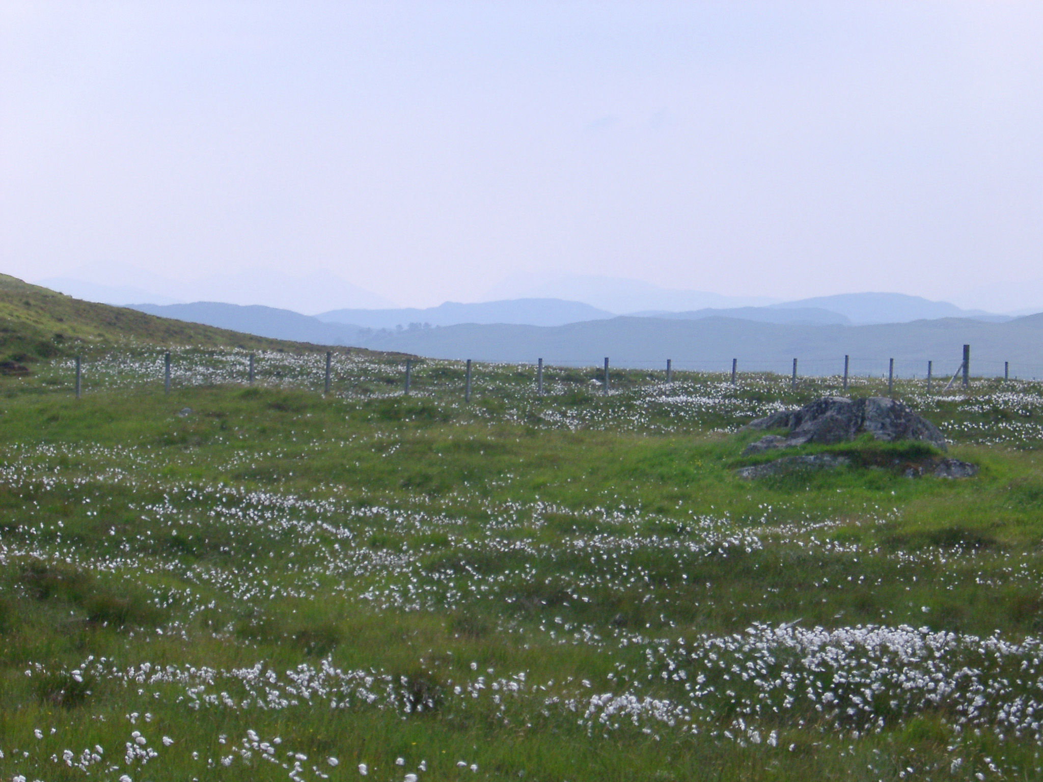 Rural scenic landscape with flax wild flowers on a green grassy meadow, with remote mountain range at the horizon, under a serene blue sky