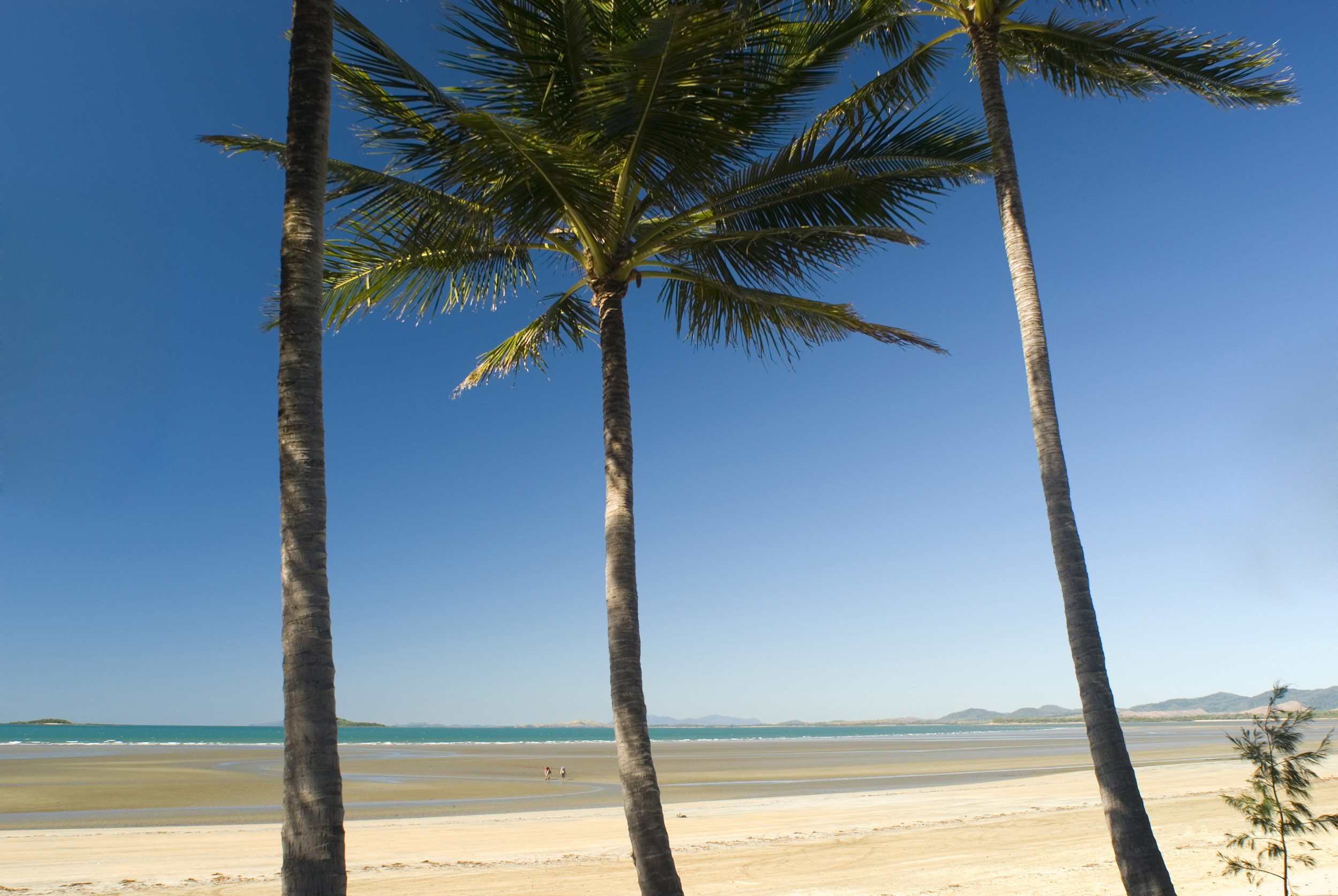 Three palm trees under a clear, blue summer day on an empty tropical beach in northern Australia.