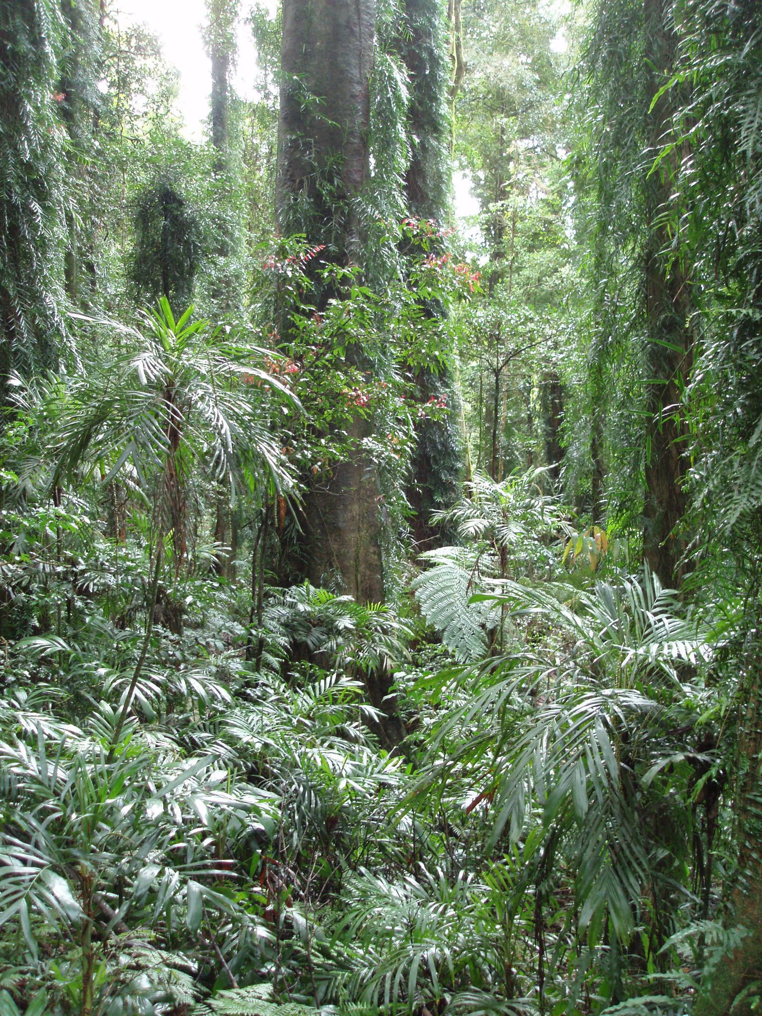 Various Tall Trees and Green Leafy Plants and Grasses at Beautiful Tropical Rainforest
