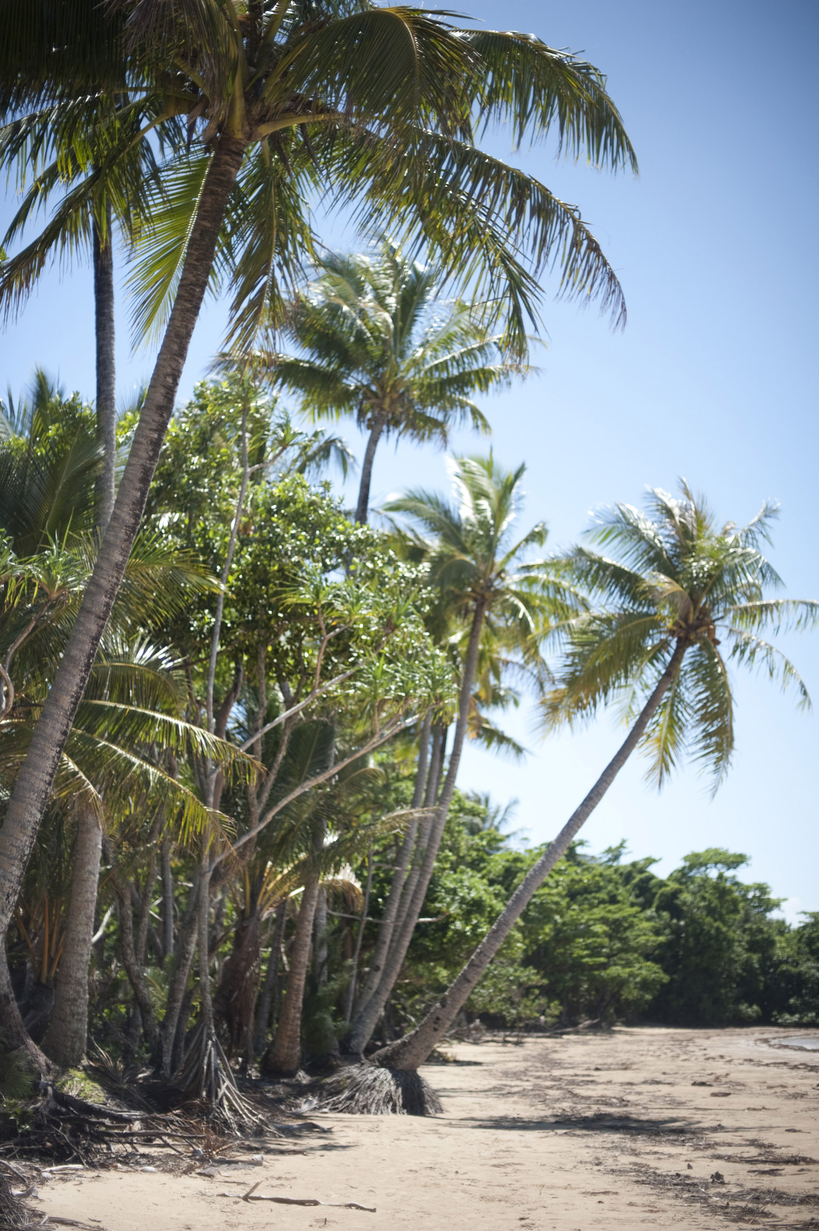 Palm trees at Mission Beach, Queensland, Australia with its deserted golden sand perfect for a tropical holiday or vacation