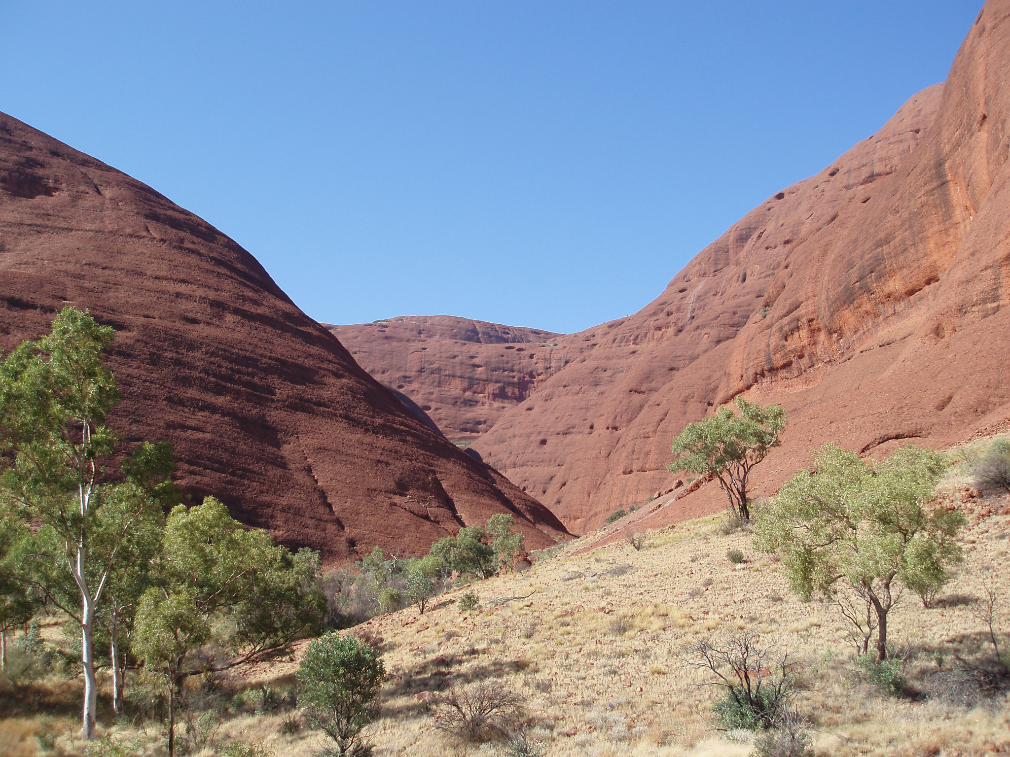 Green Trees and Large Domed Rock Formations at Famous Kata Tjuta on Light Blue Sky Background.