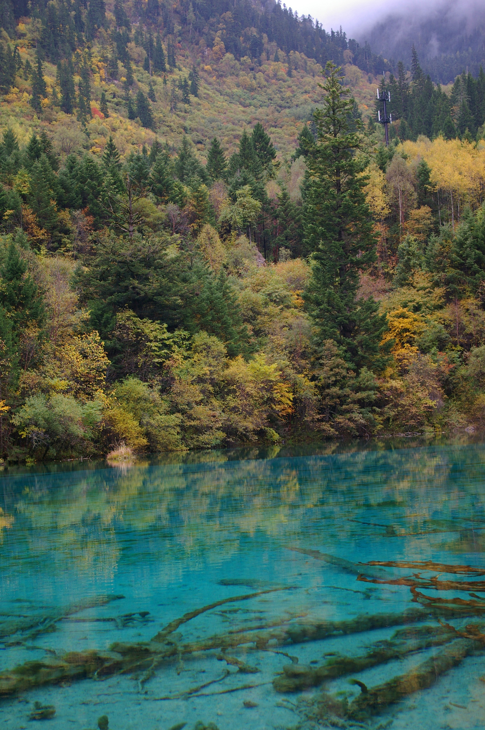 Cyan blue lake with crystal clear water and submerged branches surrounded by trees and forested mountain slopes in China