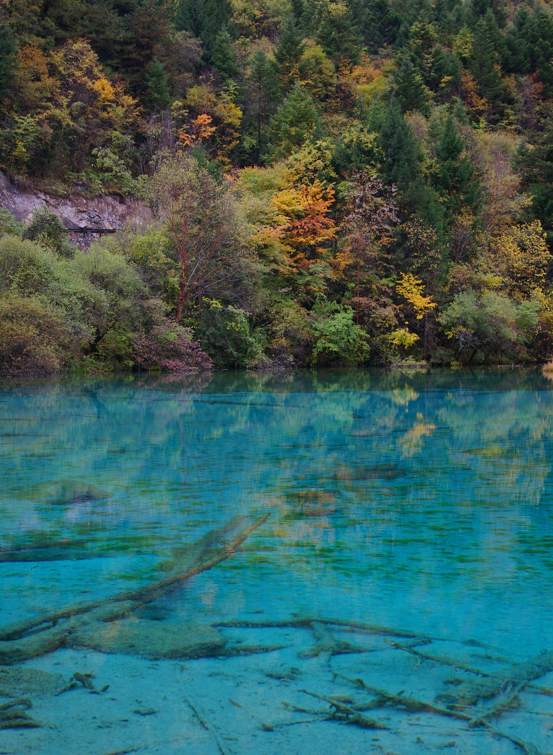Beautiful Natural Cyan Blue Lake with Nice View of Assorted Trees Located in China