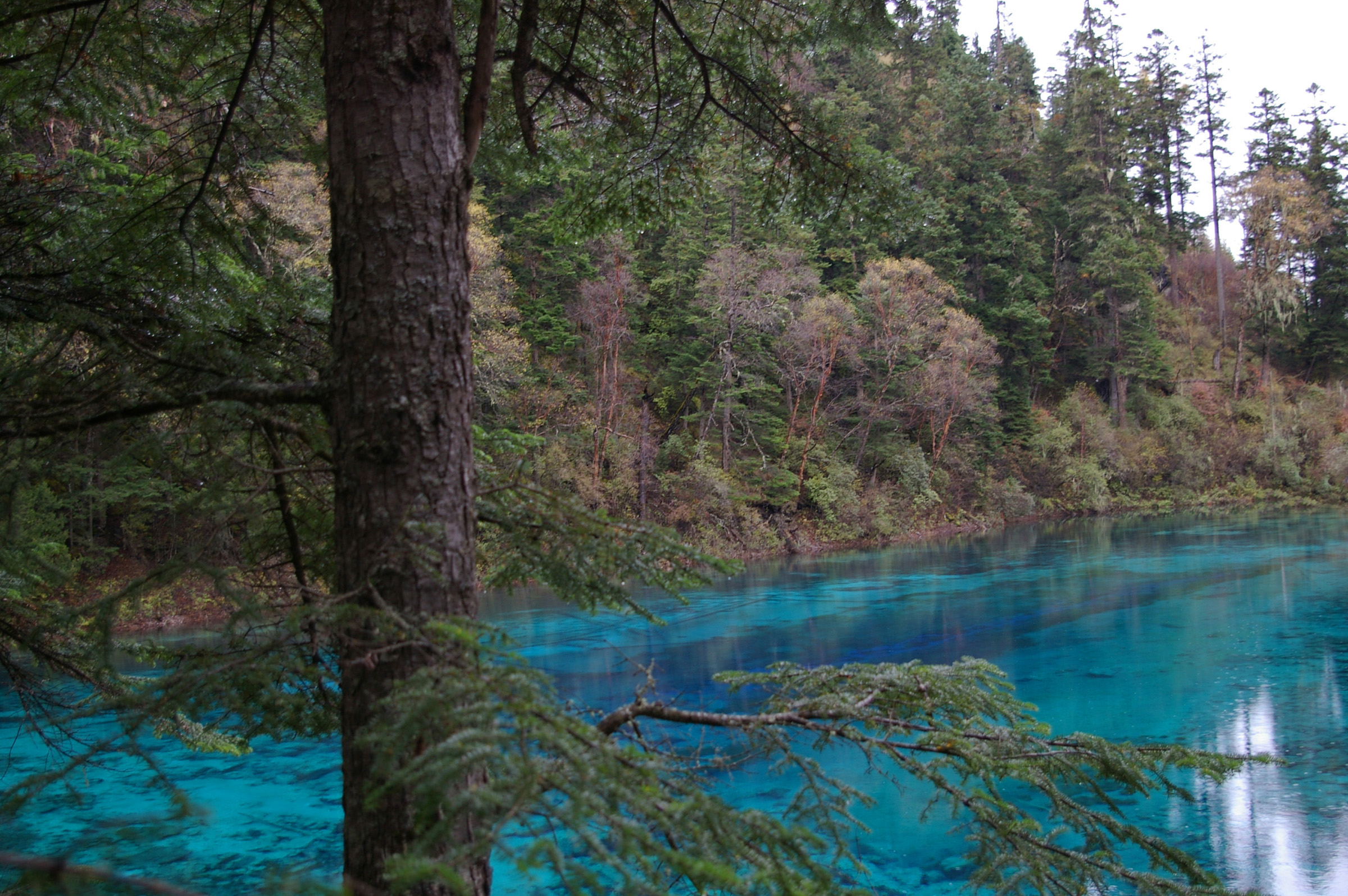 Scenic landscape with a tranquil cyan blue lake fringed with trees and forests