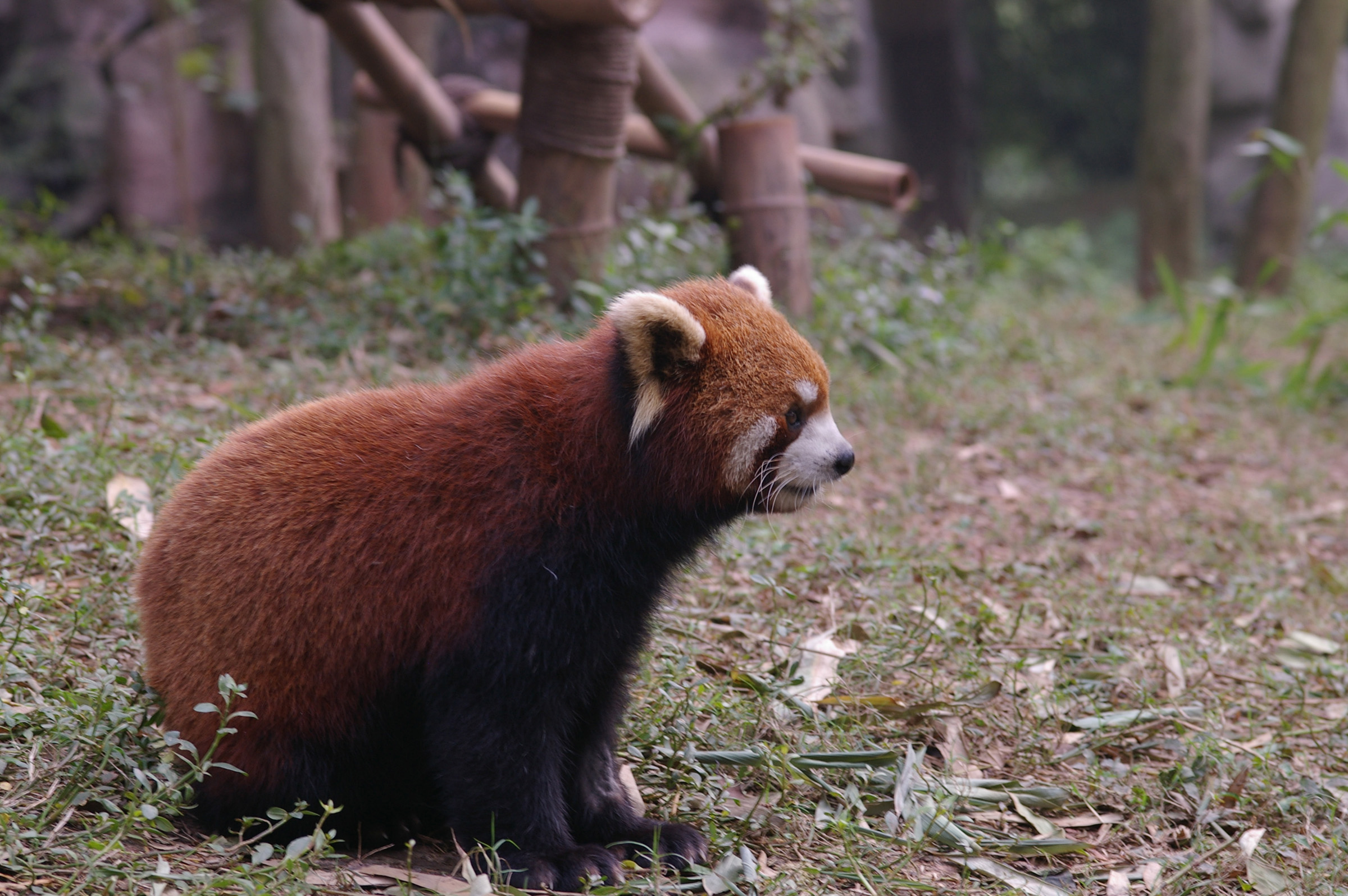 China Animal Wildlife - Grassy Zoo