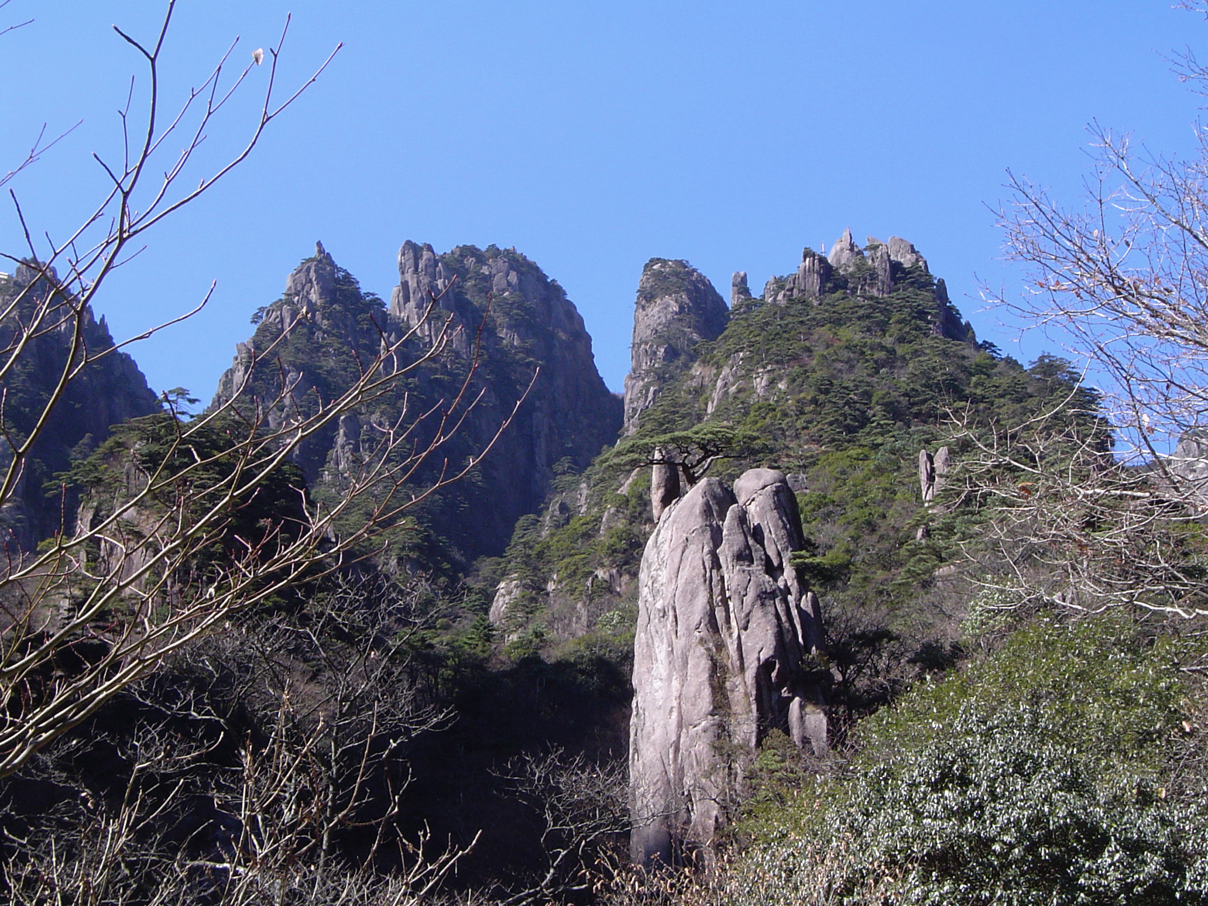 Famous Attraction of the Yellow Mountain Range with Green Plants and Trees in China. Captured with Light Blue Sky Background.
