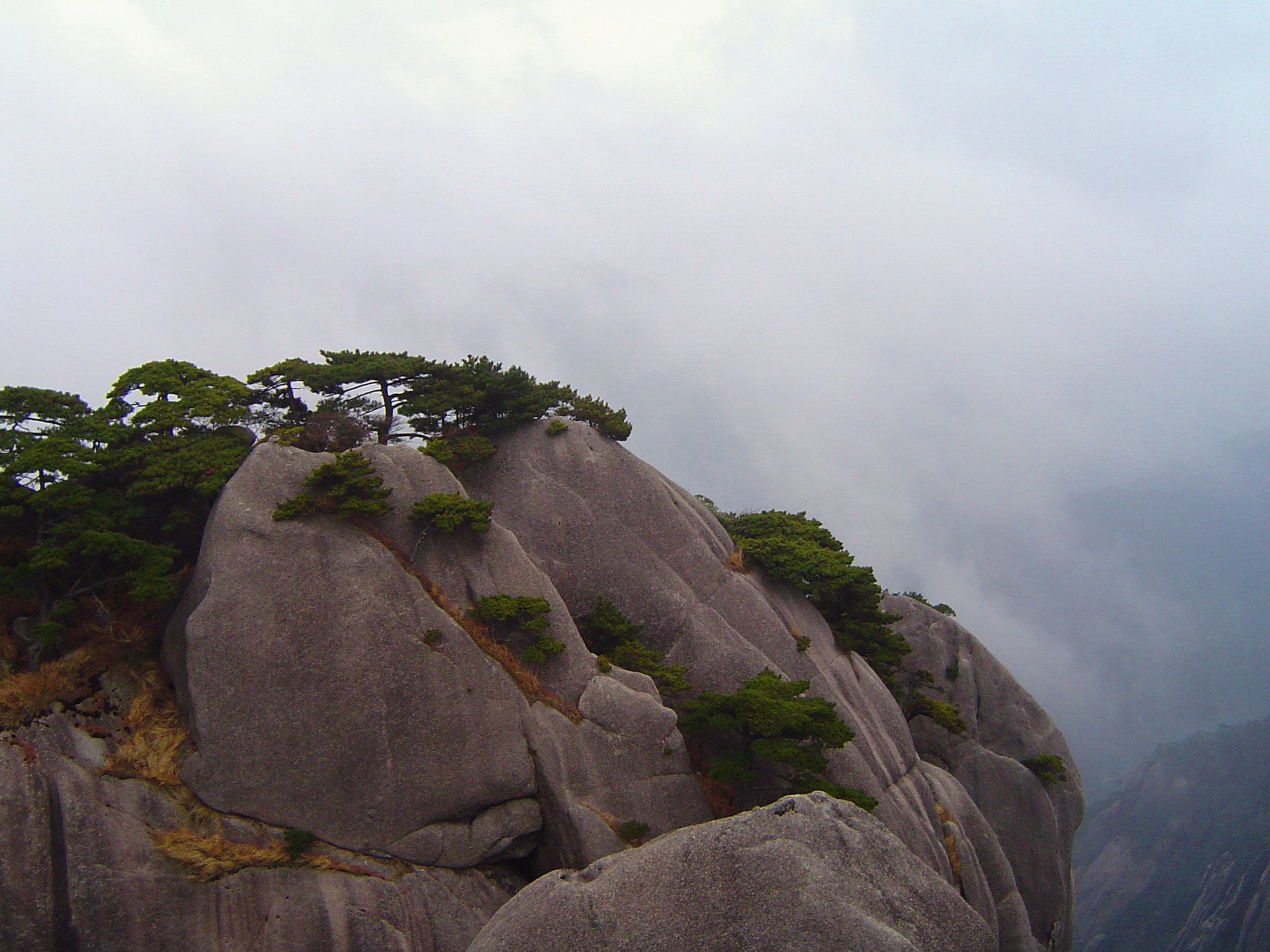 Green Plants Growing on Huge Rock Formations at Yellow Mountains in China with Foggy Background.