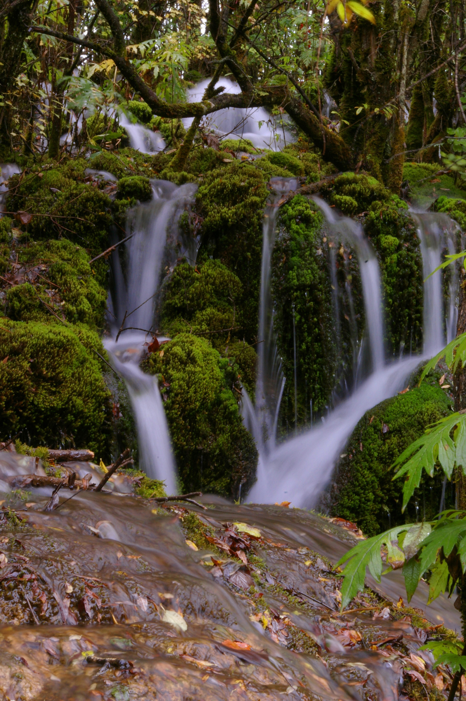 Long exposure with silky white water of several waterfalls flowing over mossy rocks in a scene of natural beauty