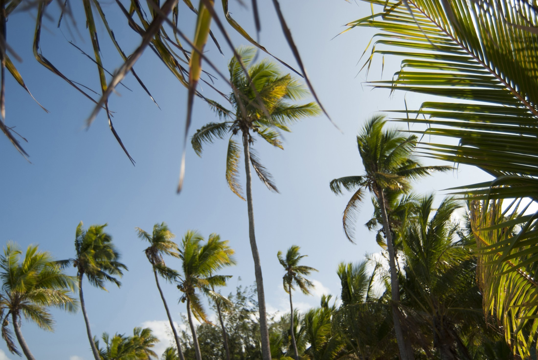 Free Stock Photo Of Tropical Palm Tree Background Photoeverywhere