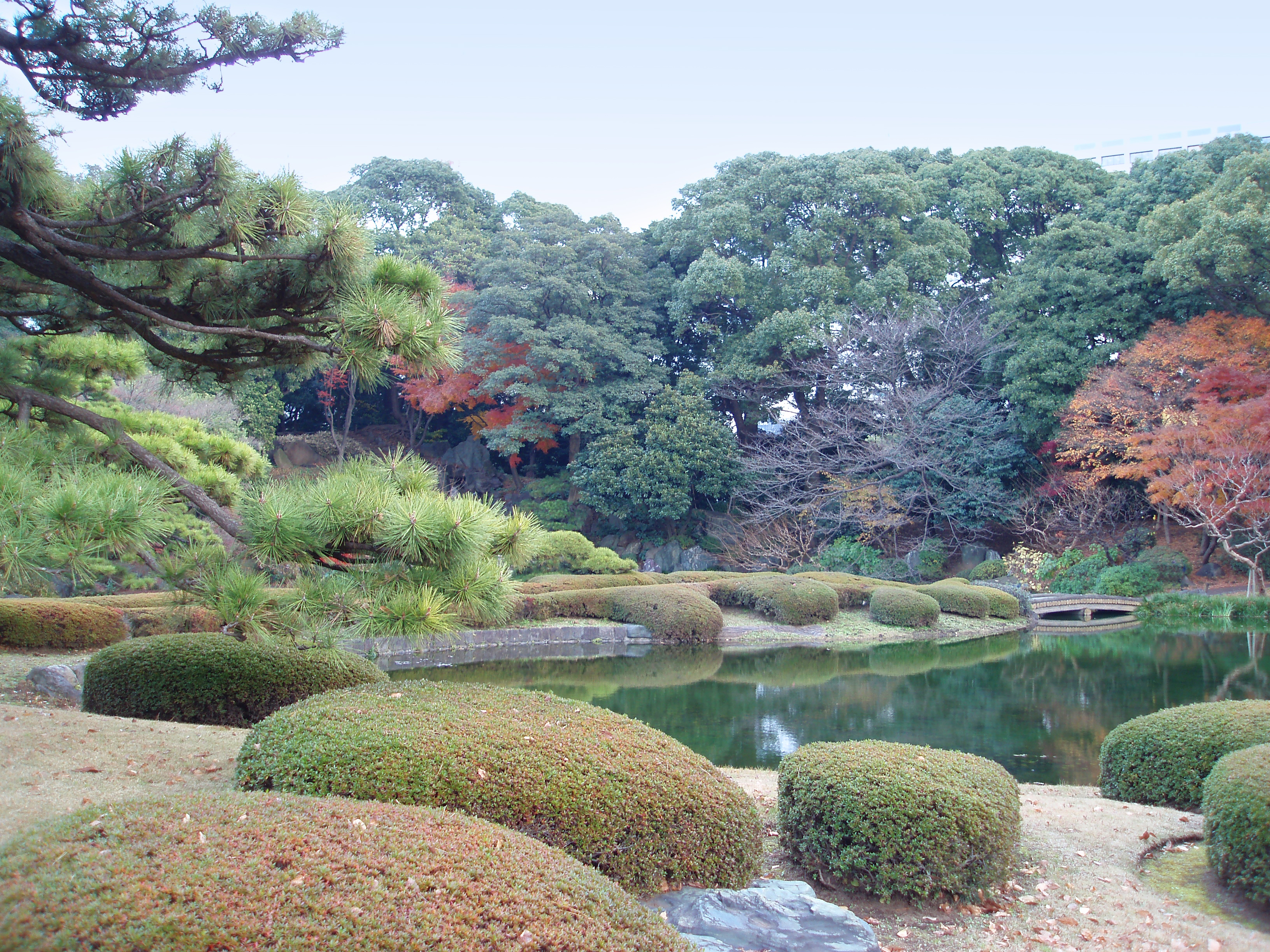 picturesque ornamental japanese garden and pond
