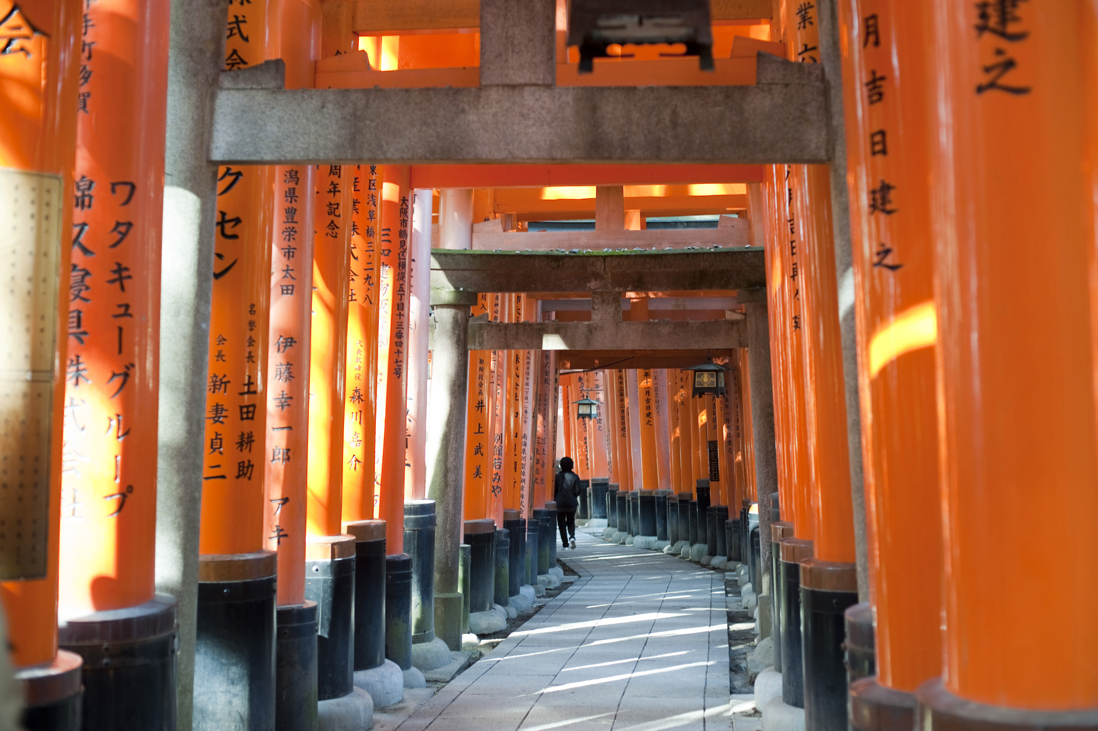 a long tunnel of torii gates at the Fushimi Inari-taisha shrine