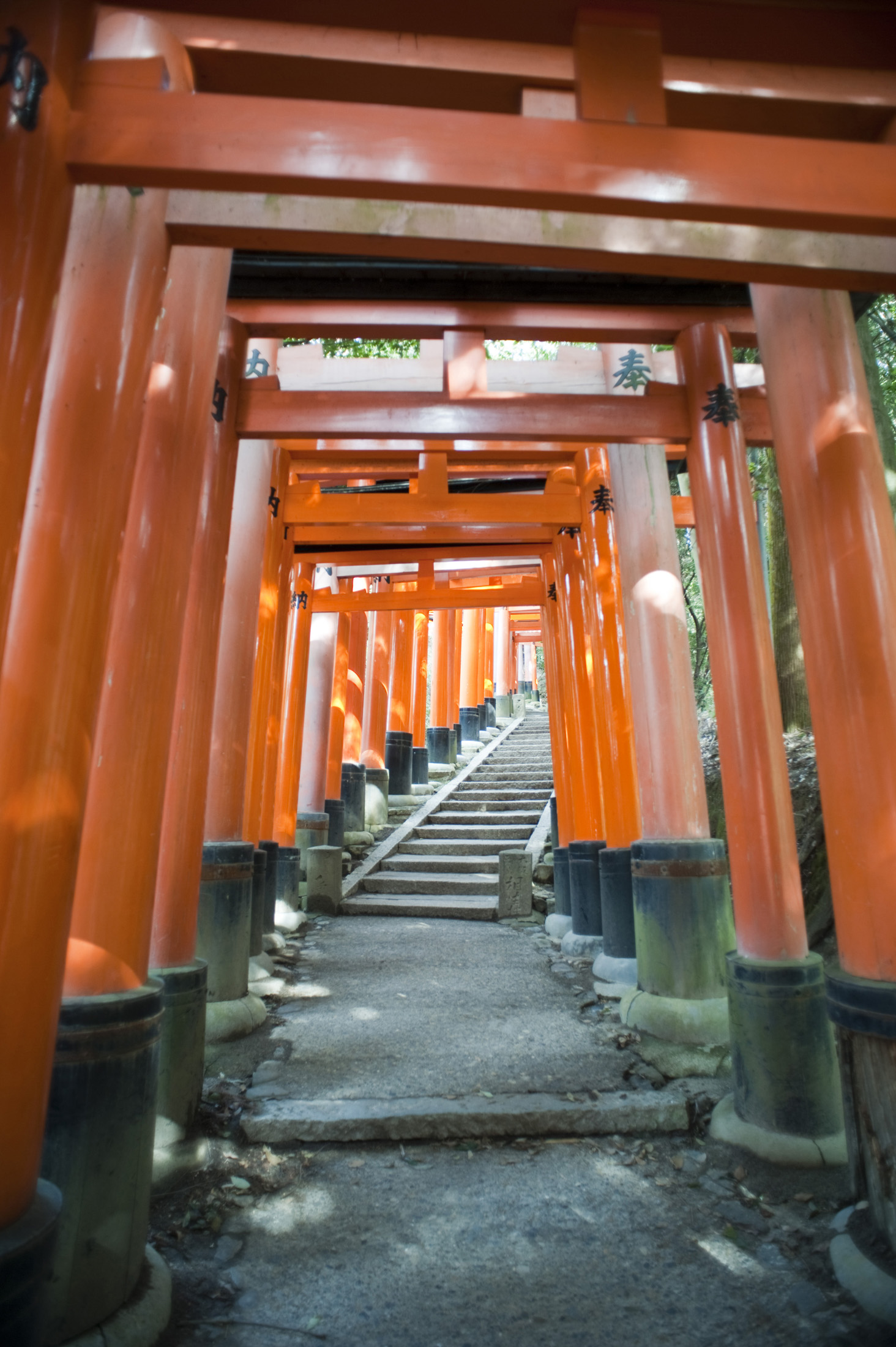 lines of torri gates donated by locals at the Fushimi Inari-taisha, an Inari shrine in Kyoto, Japan
