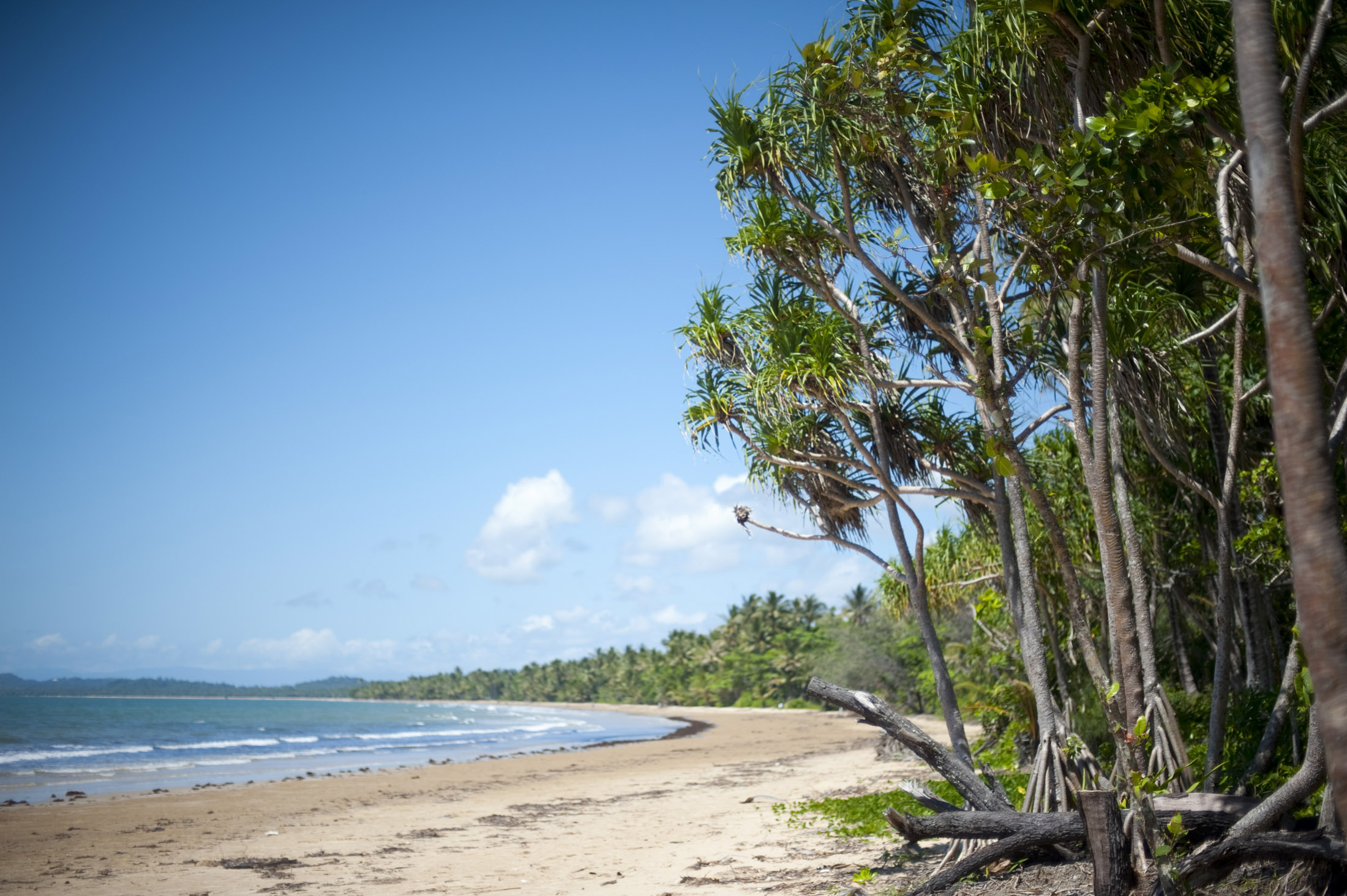 a tropical beach lined with pandanus trees