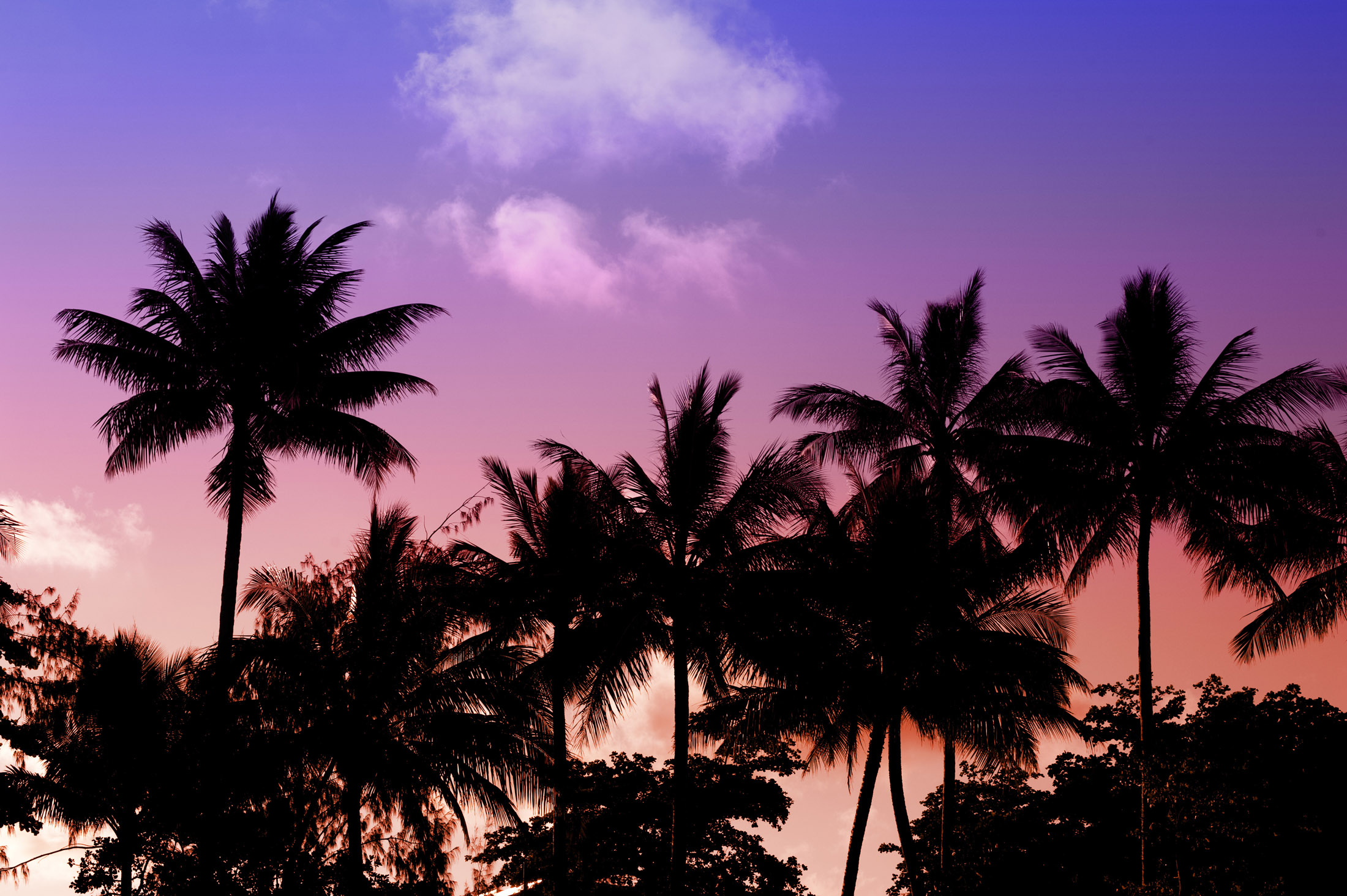 colorful sky behind a line of coconut palms