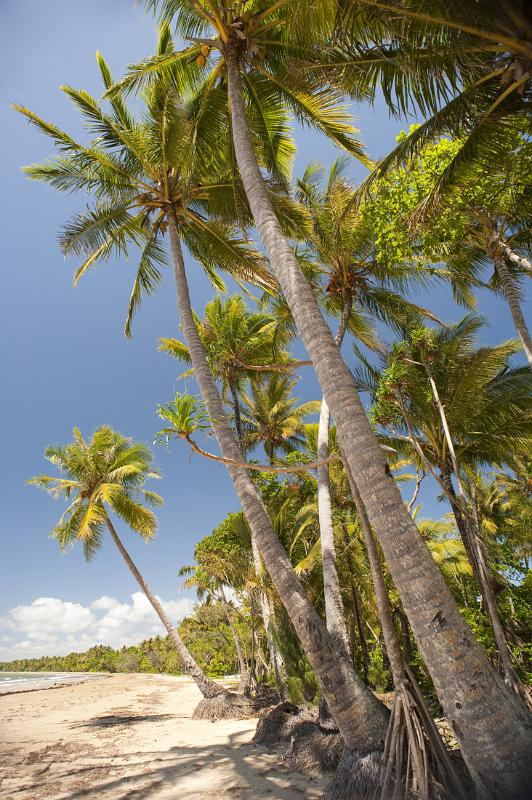 coconut palms by photoeverywhere.co.uk