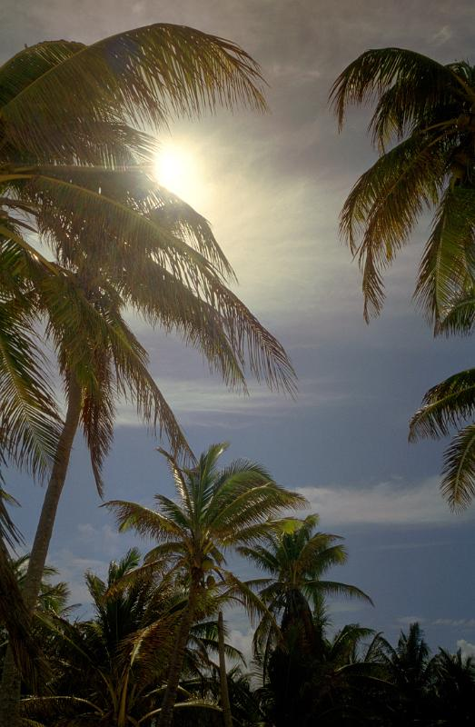 free stock photo of sunny palms