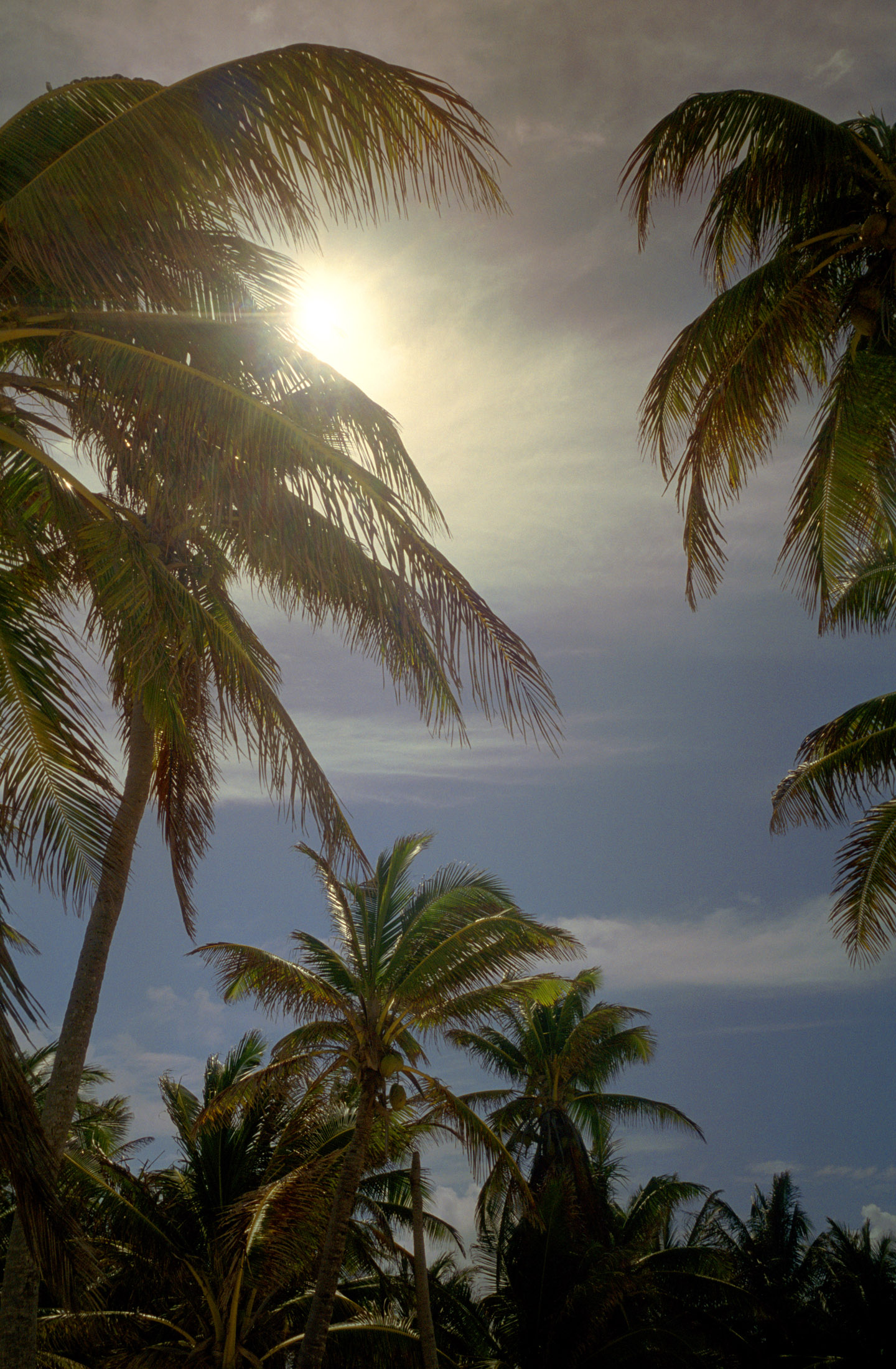 sun shining through a grove of palm trees in mexico