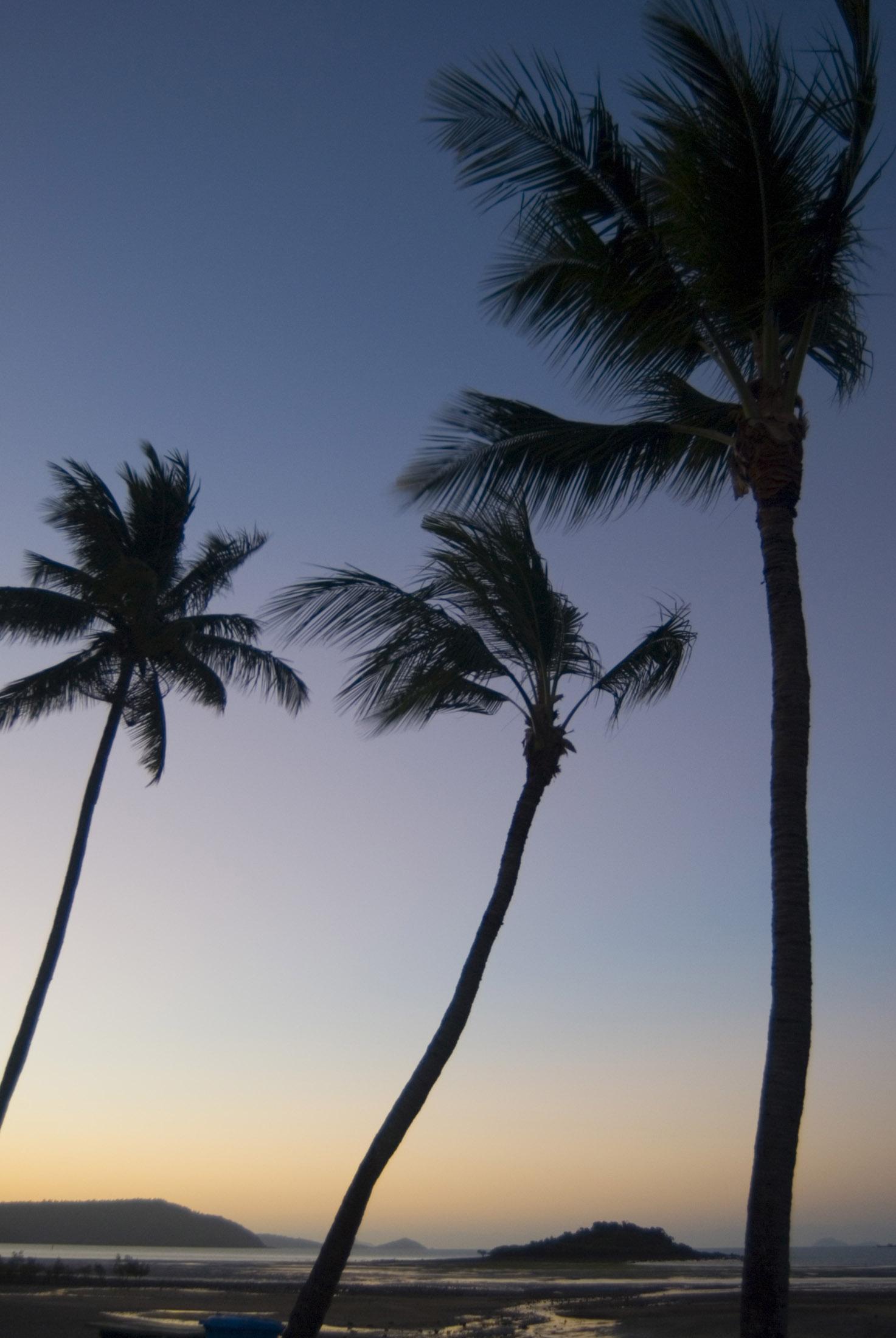 tropical sunset palm tree - photo #27