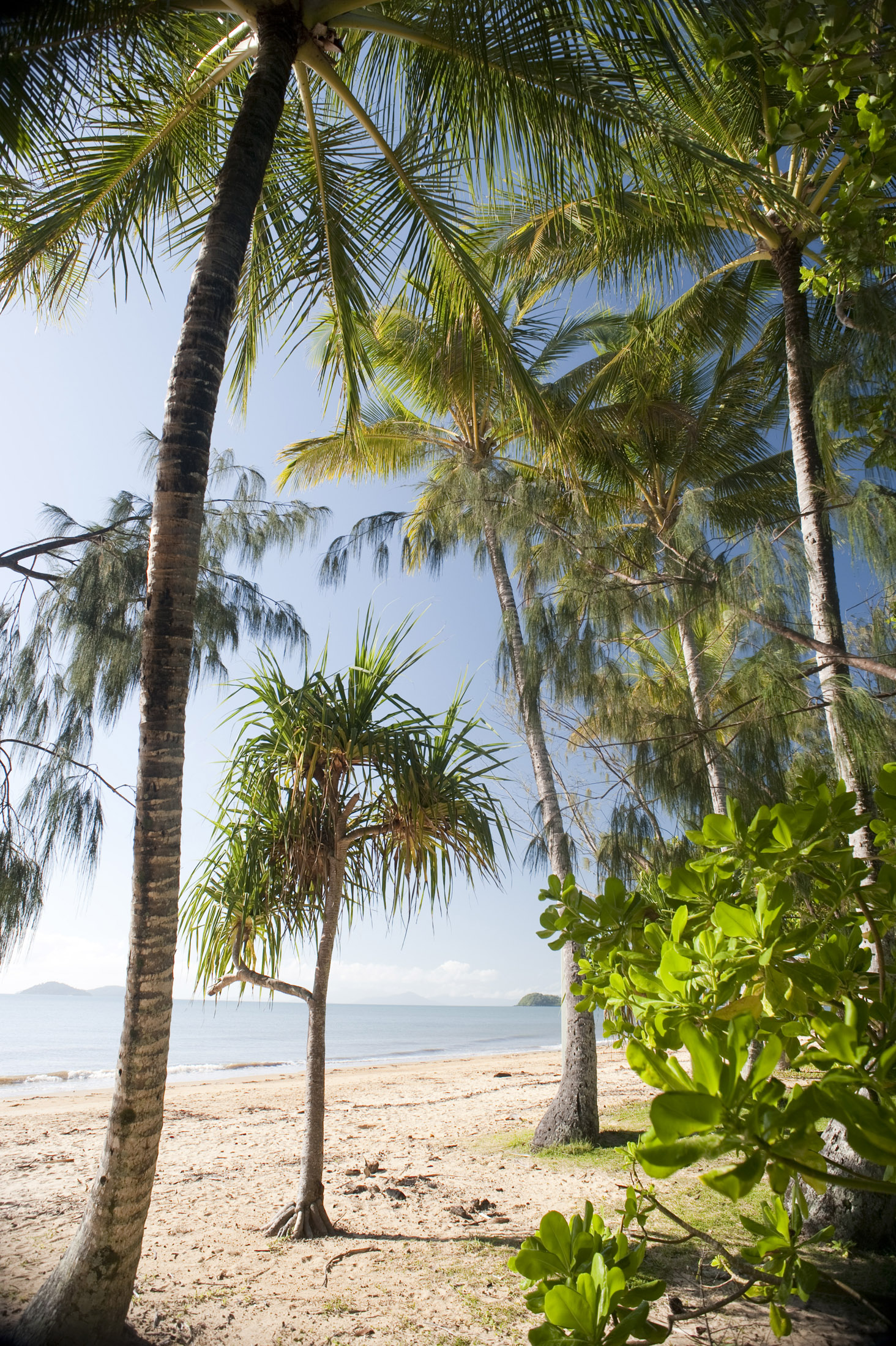 looking out from lush tropical vegetation to a sandy beach and warm tropical waters beyond