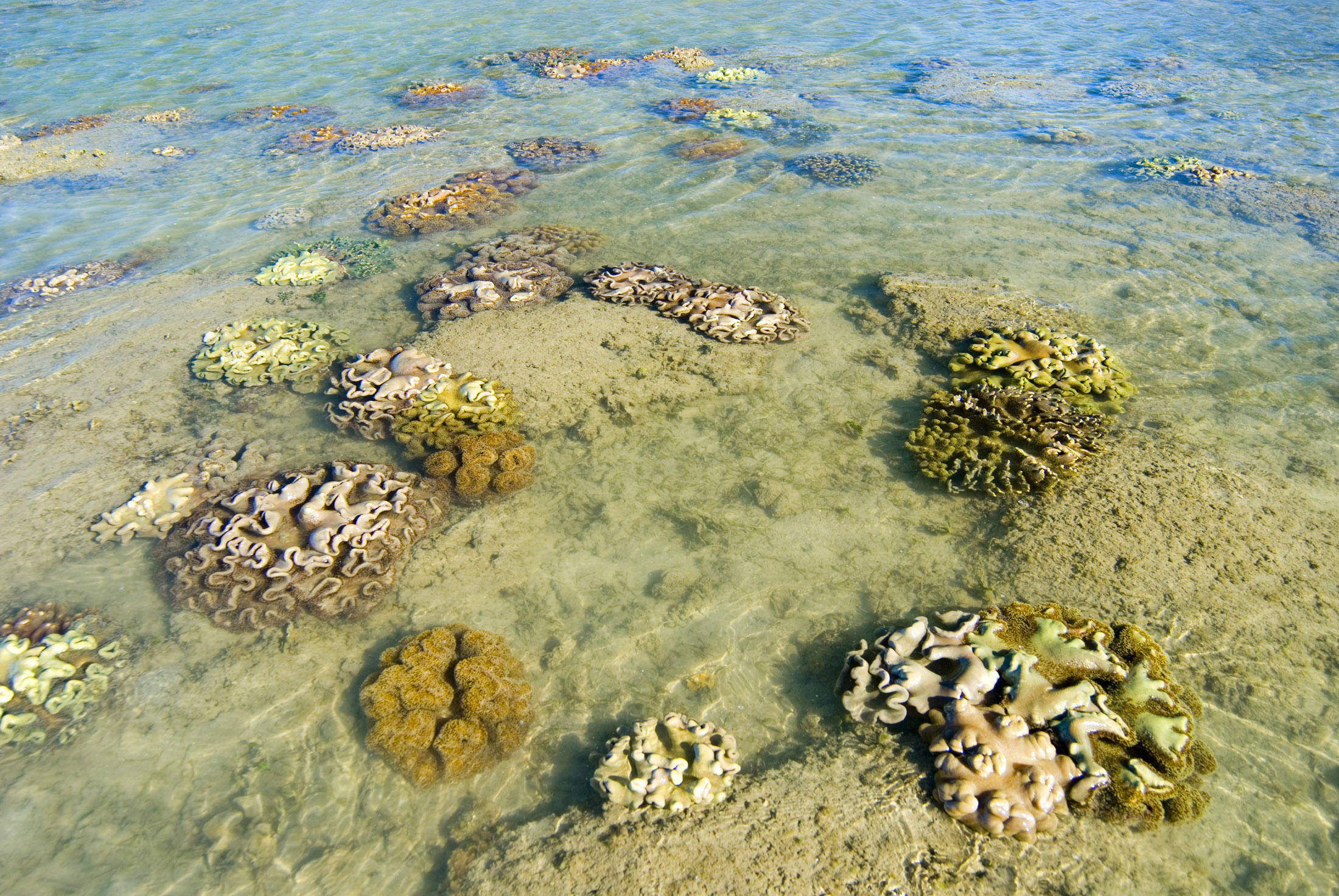 colorful corals in shallow water during low tide