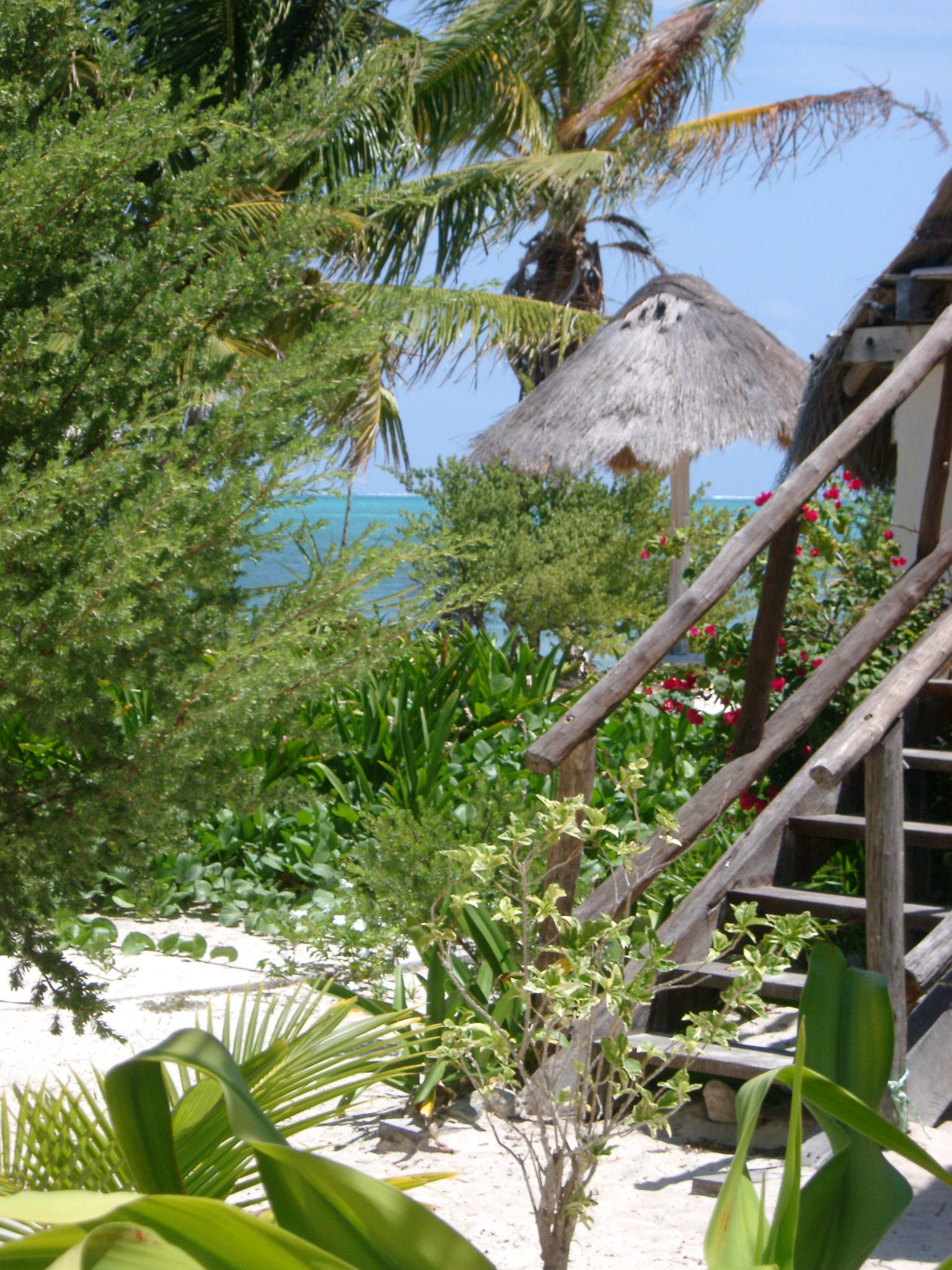 Flight of wooden steps leading up to a beachfront cabana in Mexico with tropical palm trees and a thatched roof