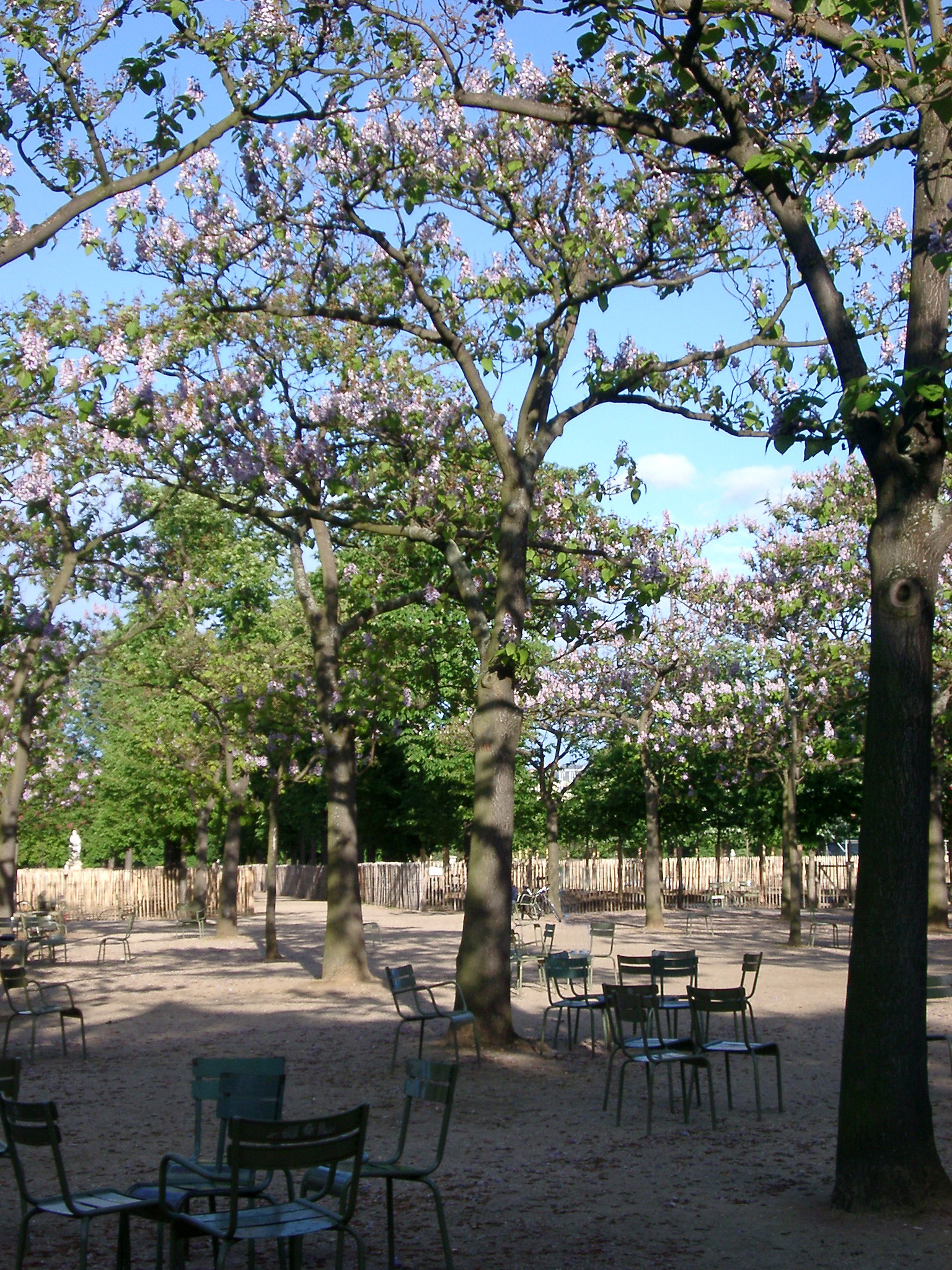 Spring blossom in a Paris park with groups of chairs under shady trees for people to sit and relax
