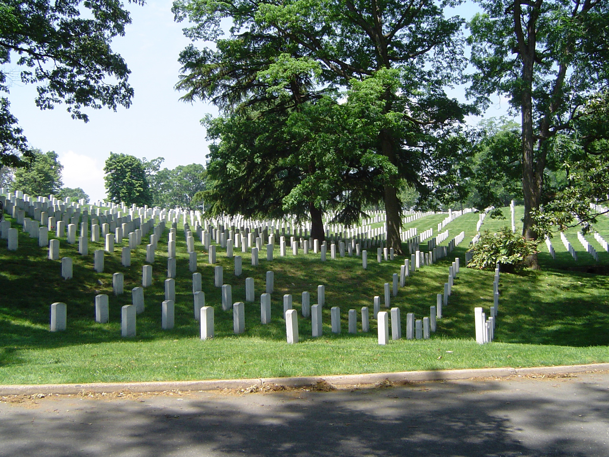 Graves at Grassy Arlington national Cemetery with Tall Green Trees. Isolated on Lighter Blue Sky Background.