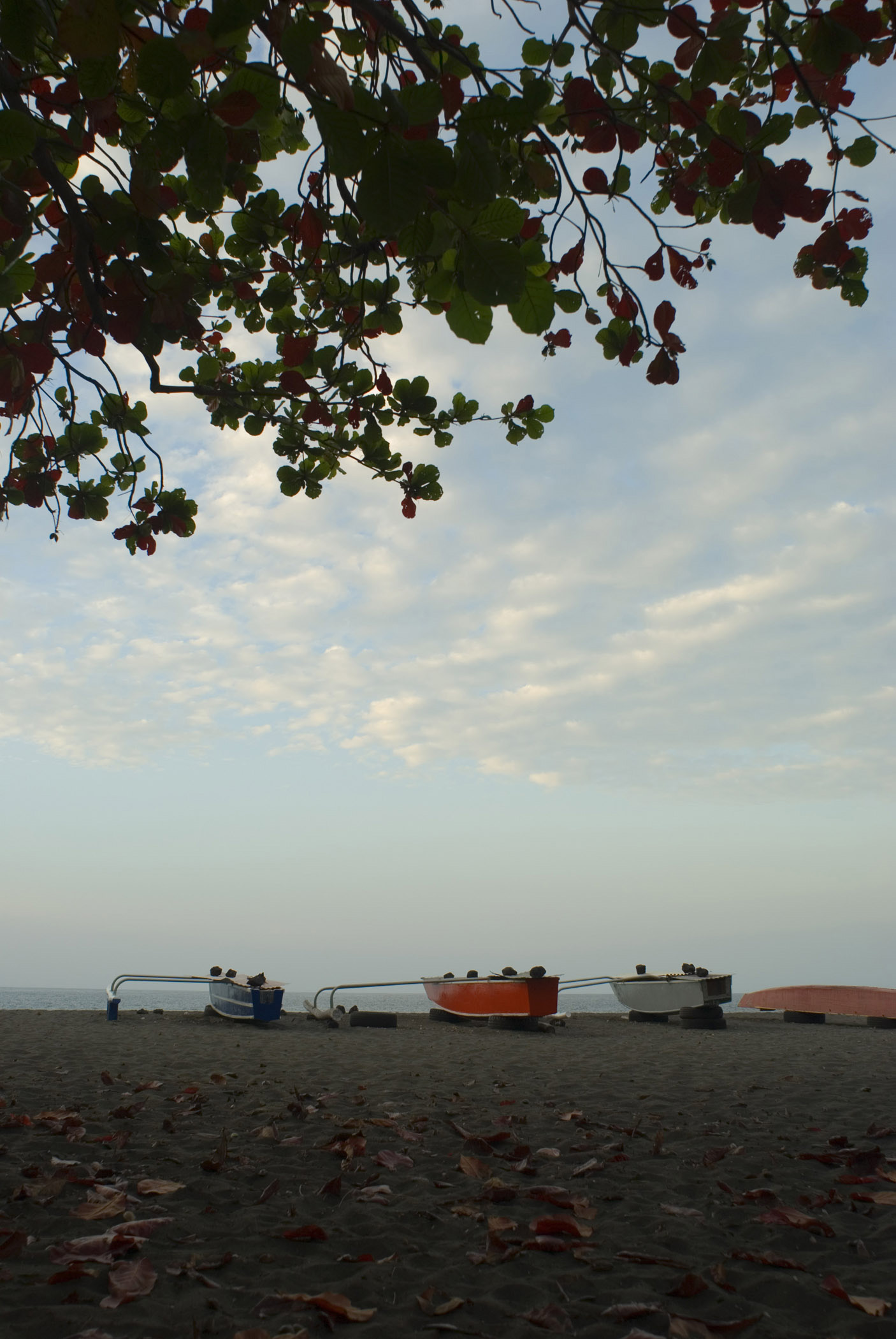 Outrigger Canoes Lined Up on Deserted Beach