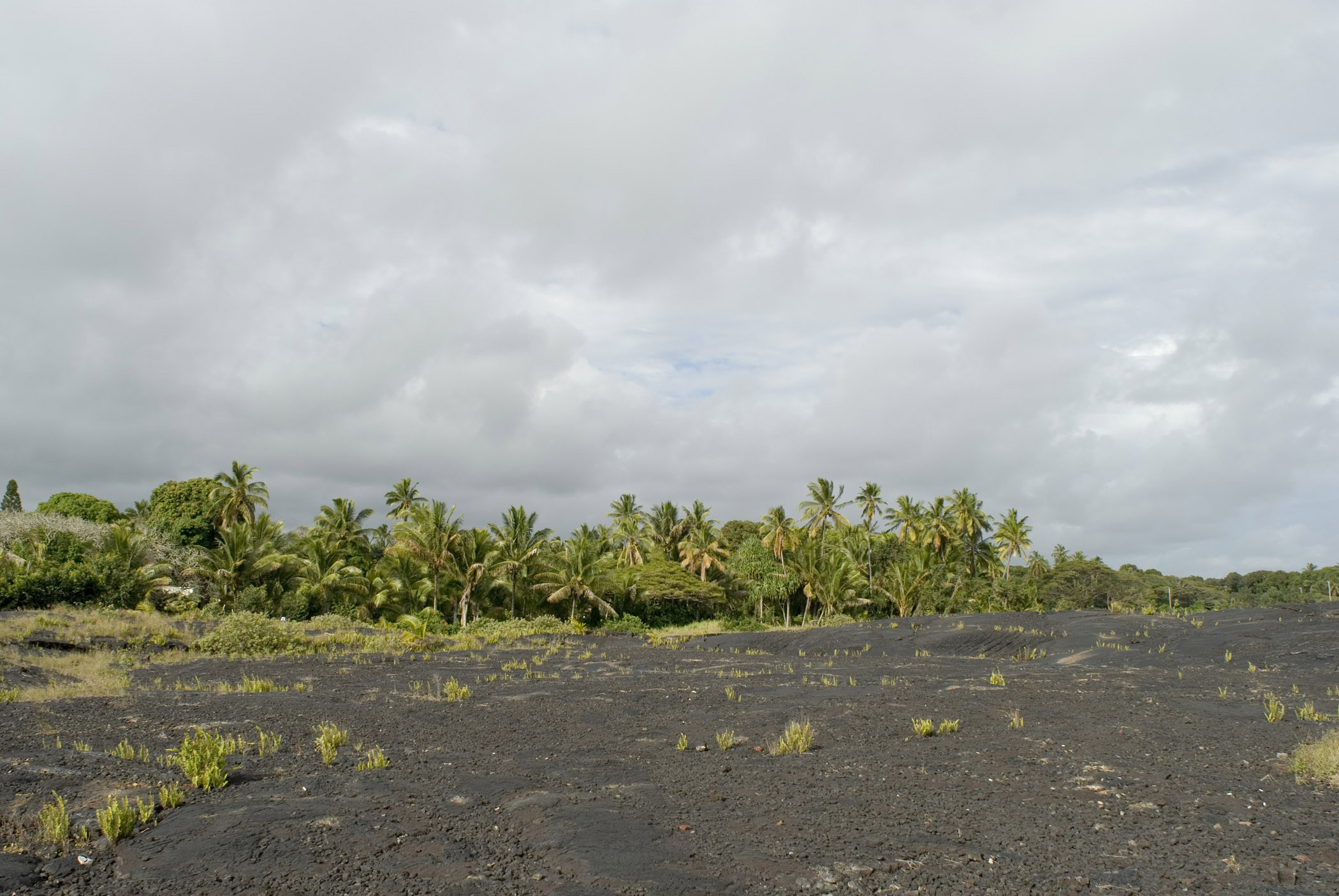 Green Plants Growing at Kalapana Lava Field Isolated on Lighter Gray Clouds Background.