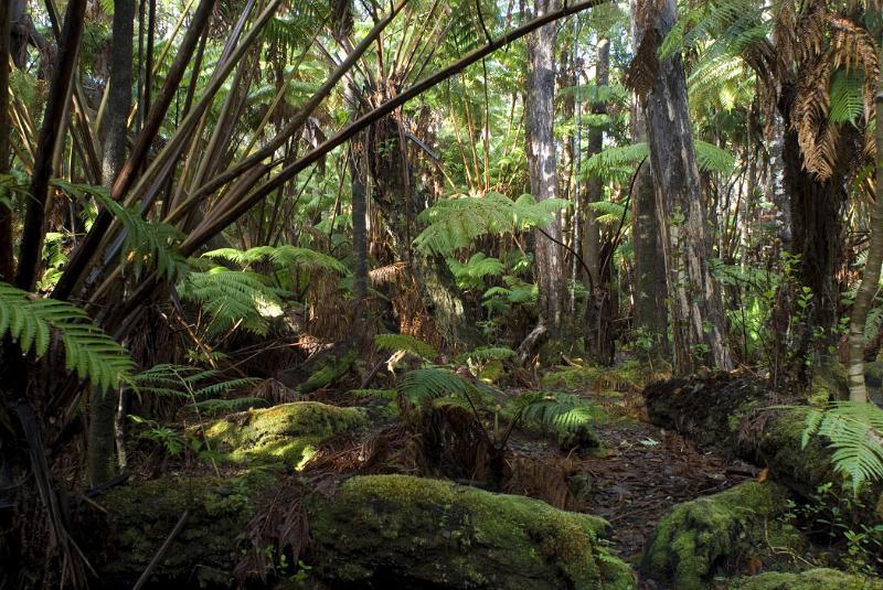 Free Stock Photo Of Hawaiian Rainforest Background