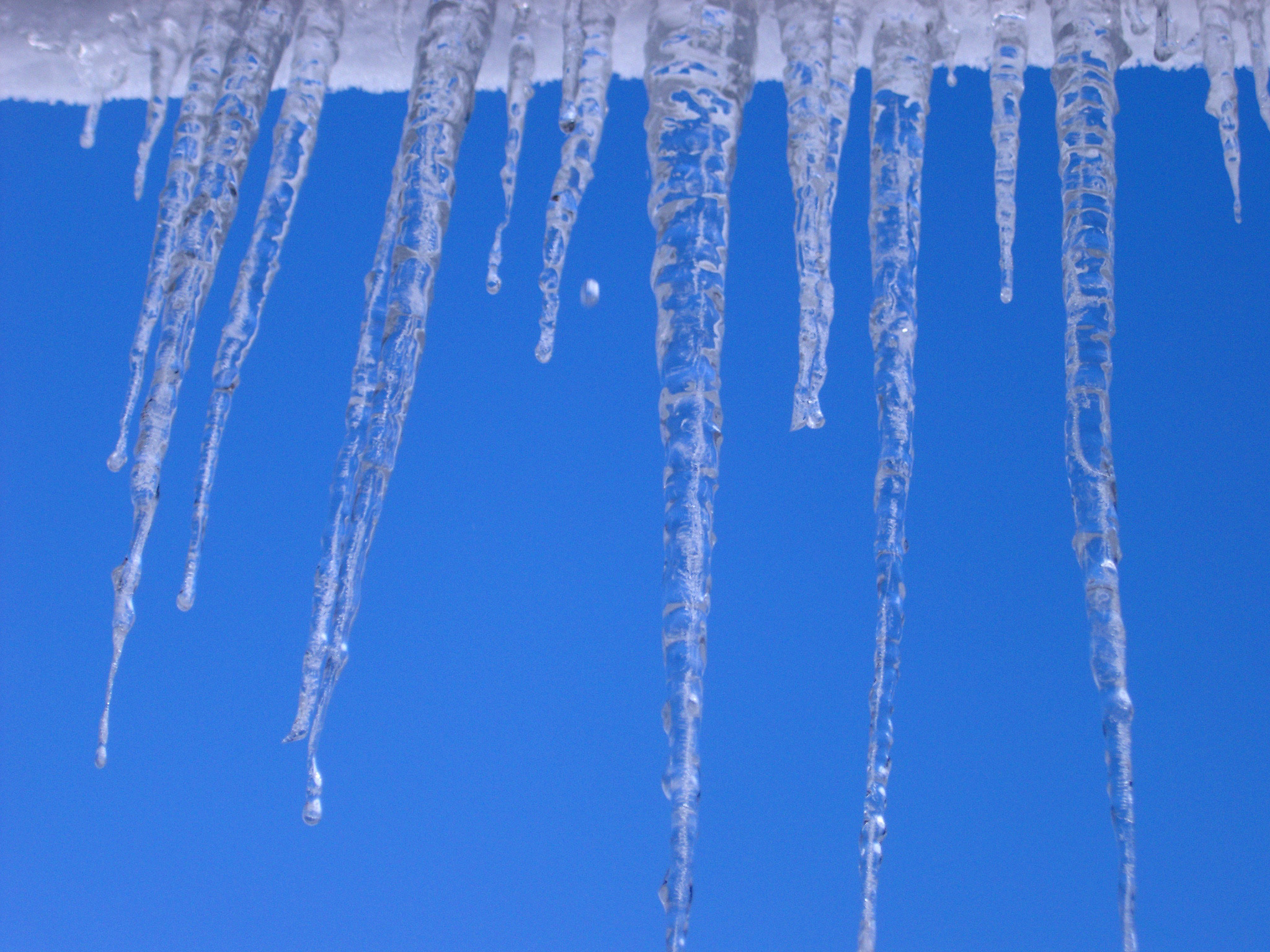Row of long icicles hanging from the edge of a snow covered roof against a clear crisp sunny blue winter sky